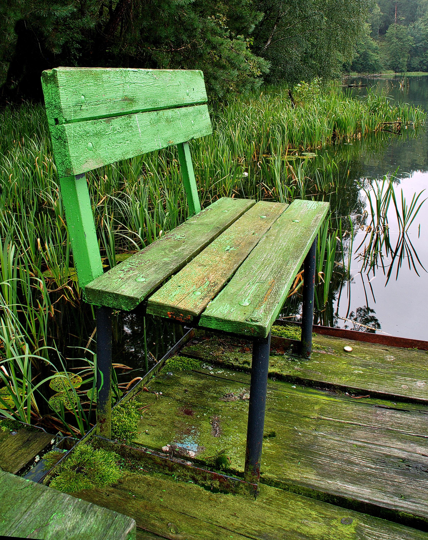 Fotos gratis : árbol, césped, madera, banco, flor, lago, verde ...