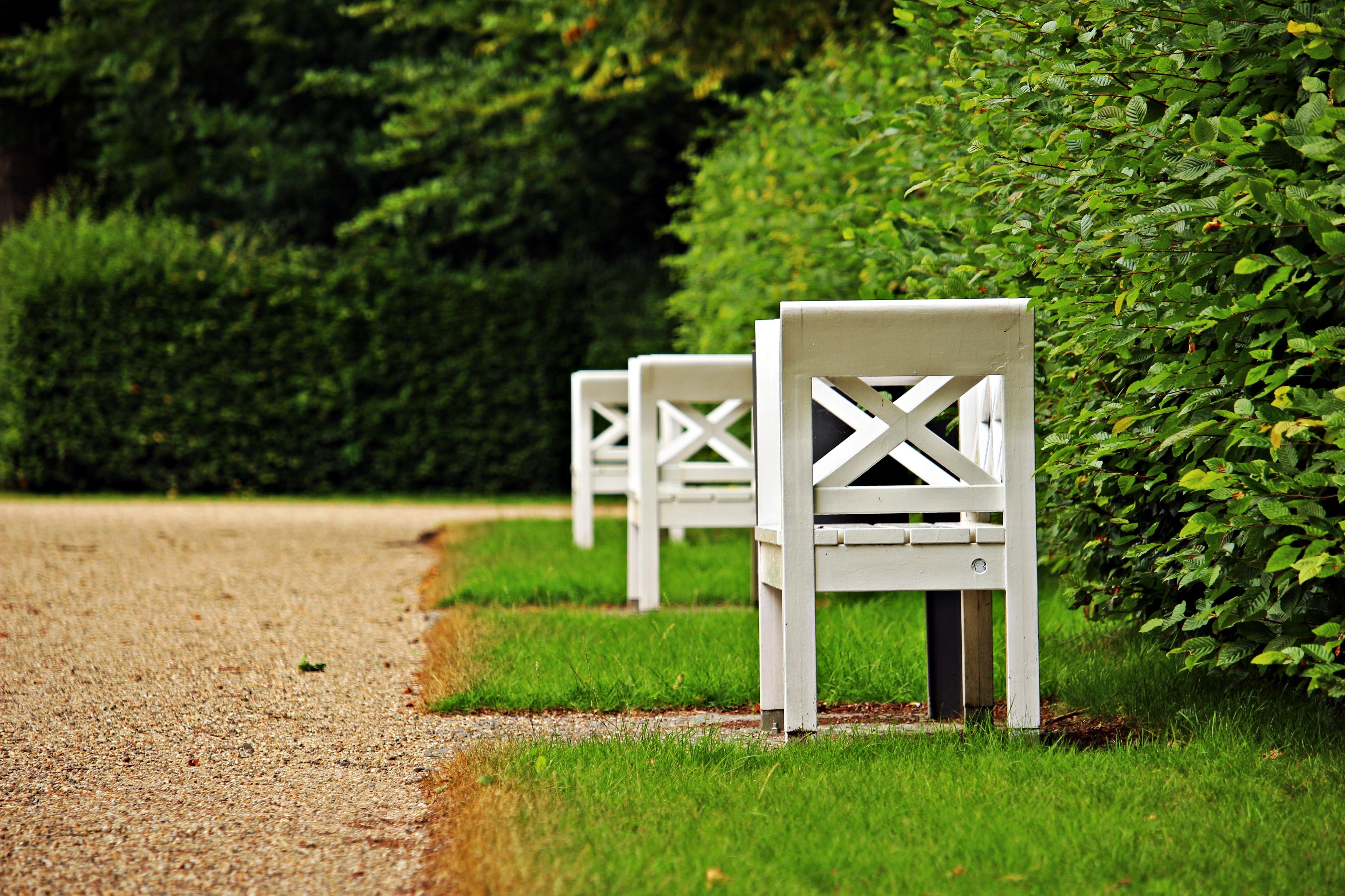 Fotos gratis : árbol, césped, madera, verde, patio interior, mueble ...