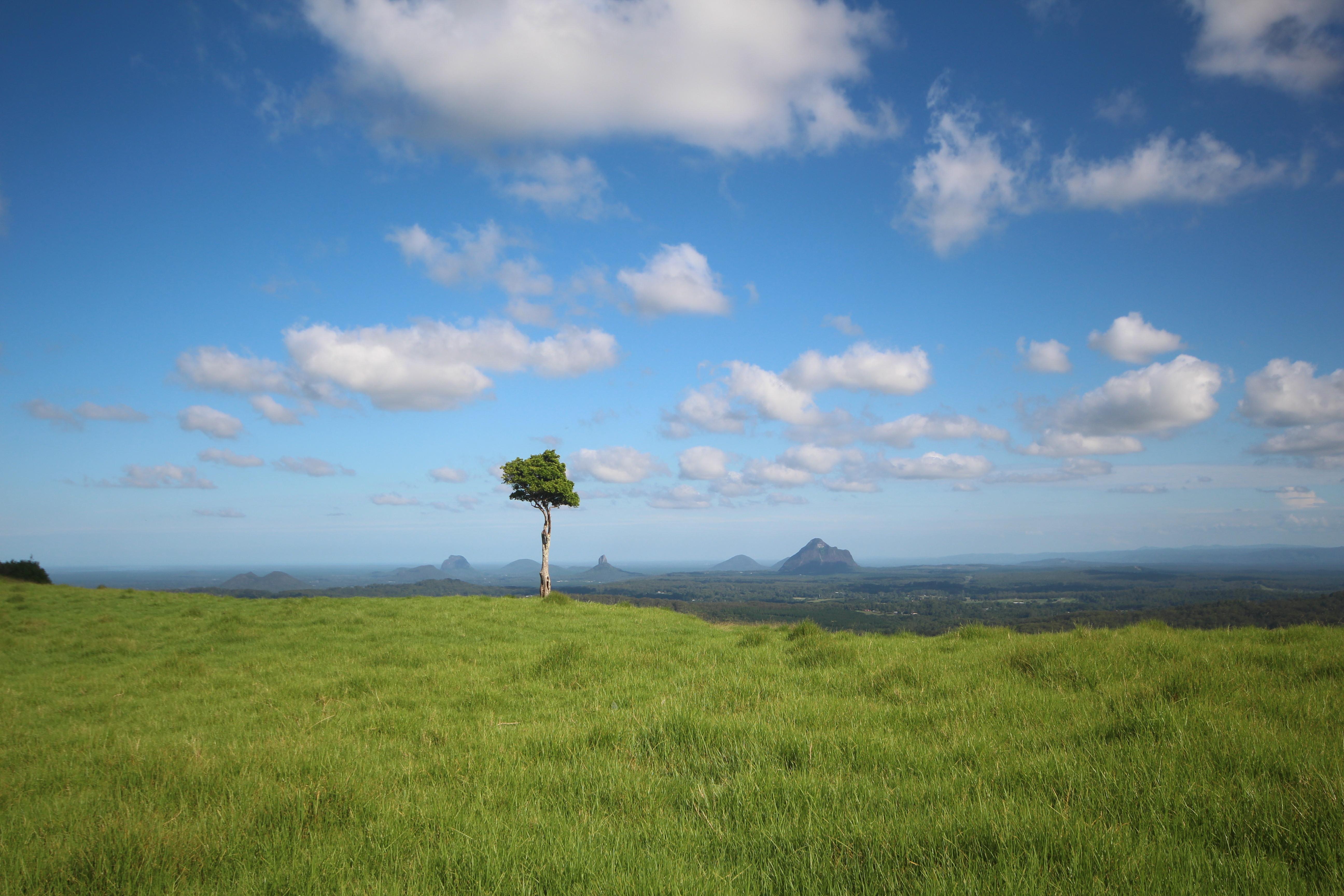 Free Images Tree Grassland Sky Ecosystem Prairie