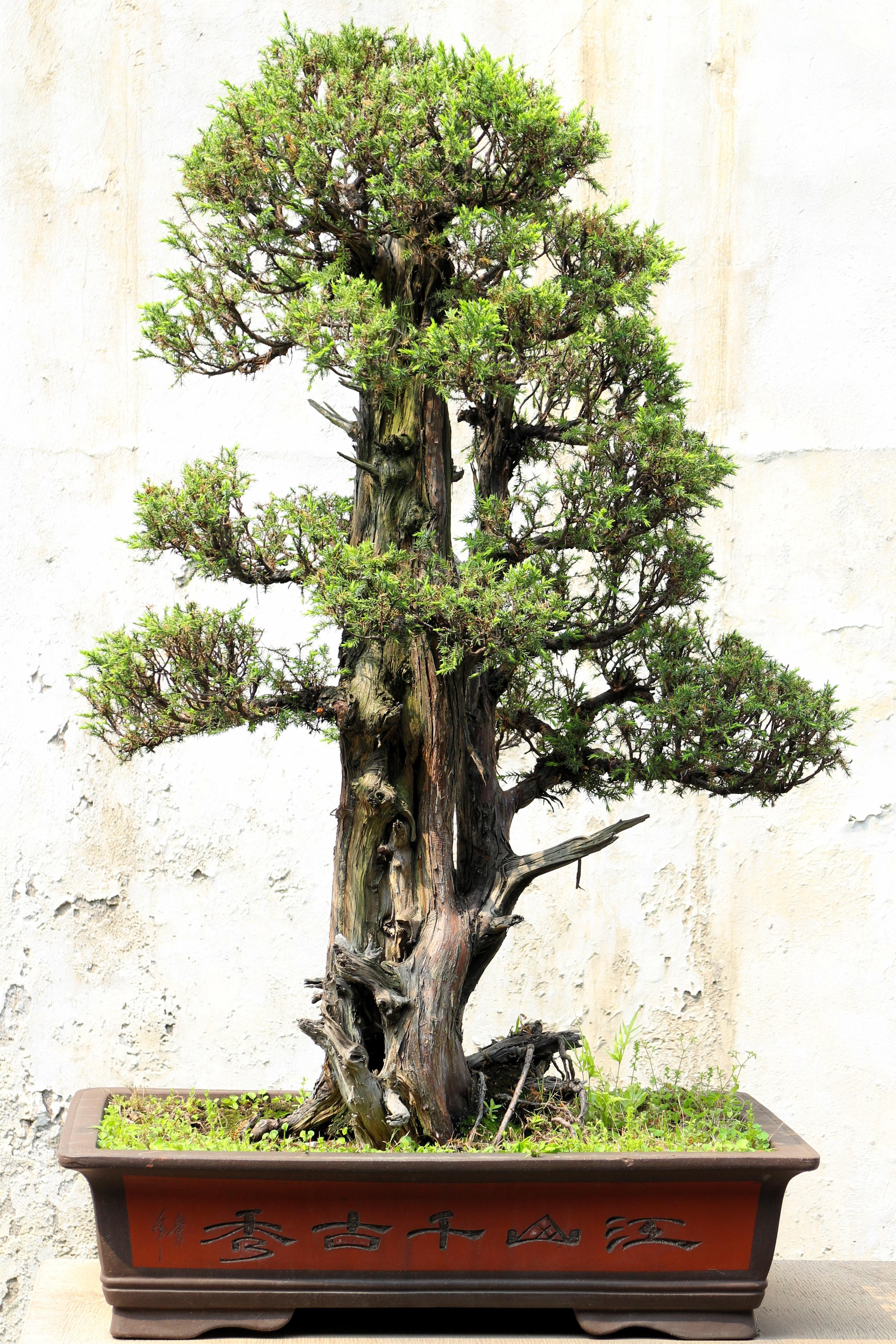 Kostenlose Foto Baum Wachstum Grun Asien Garten Japan