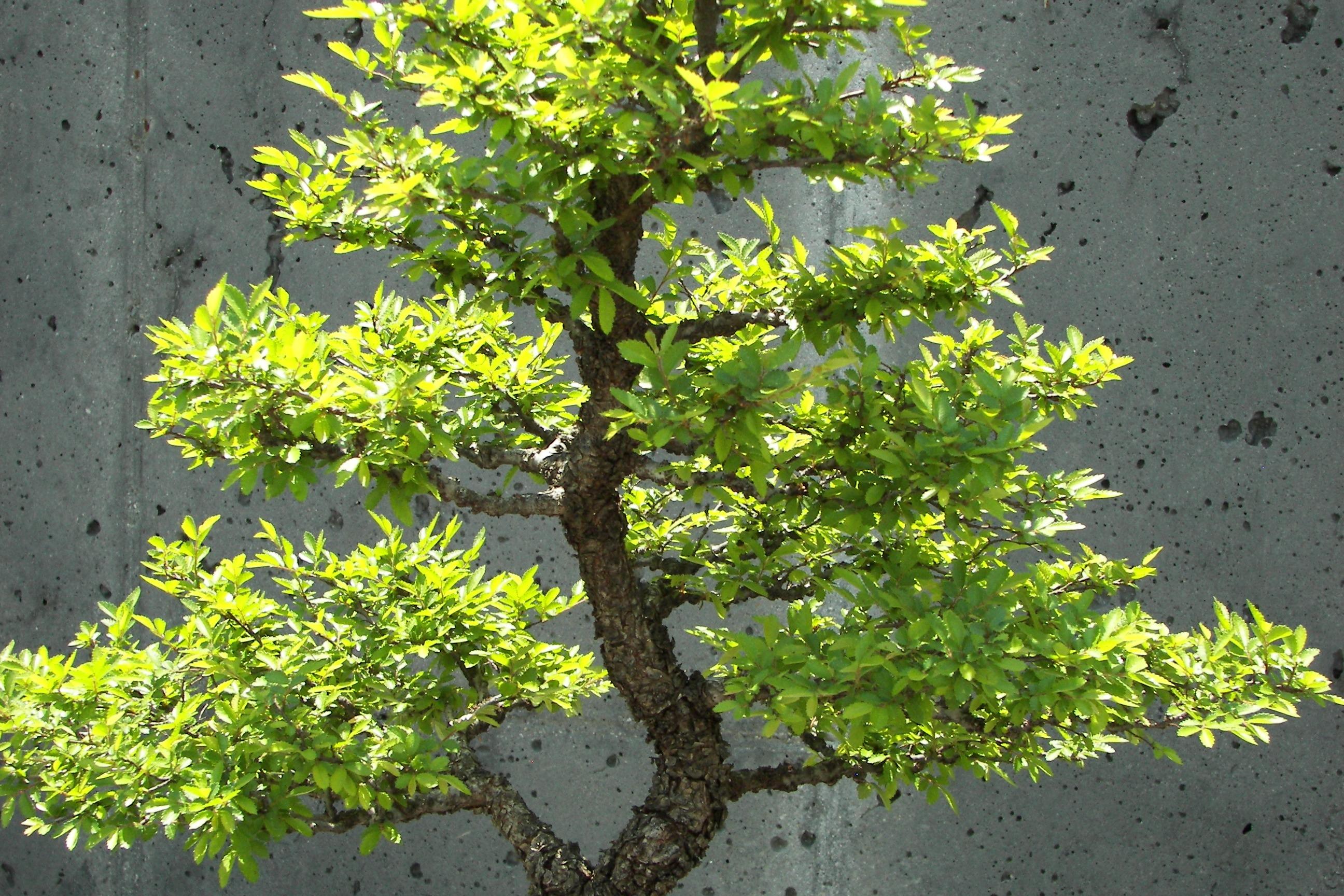 images gratuites arbre croissance feuille fleur vert. Black Bedroom Furniture Sets. Home Design Ideas