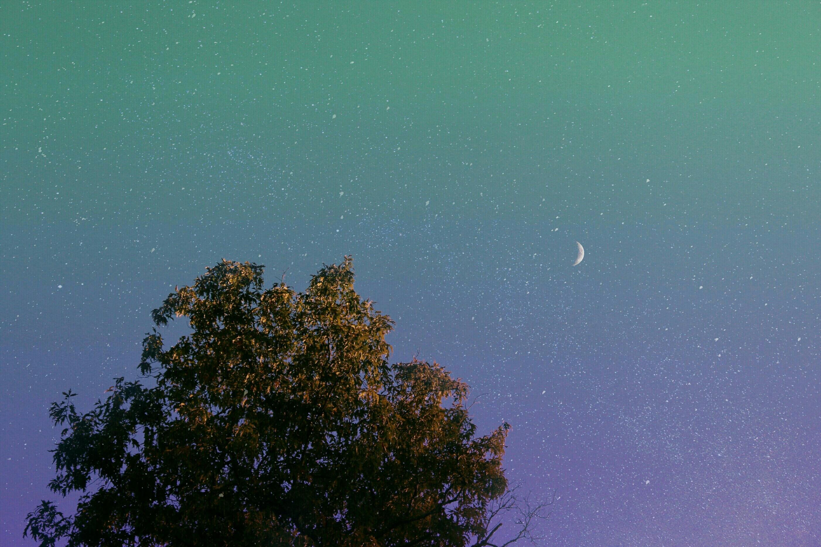 Fotograf Agac Ufuk Bulut Gokyuzu Gece Gunes Isigi Star