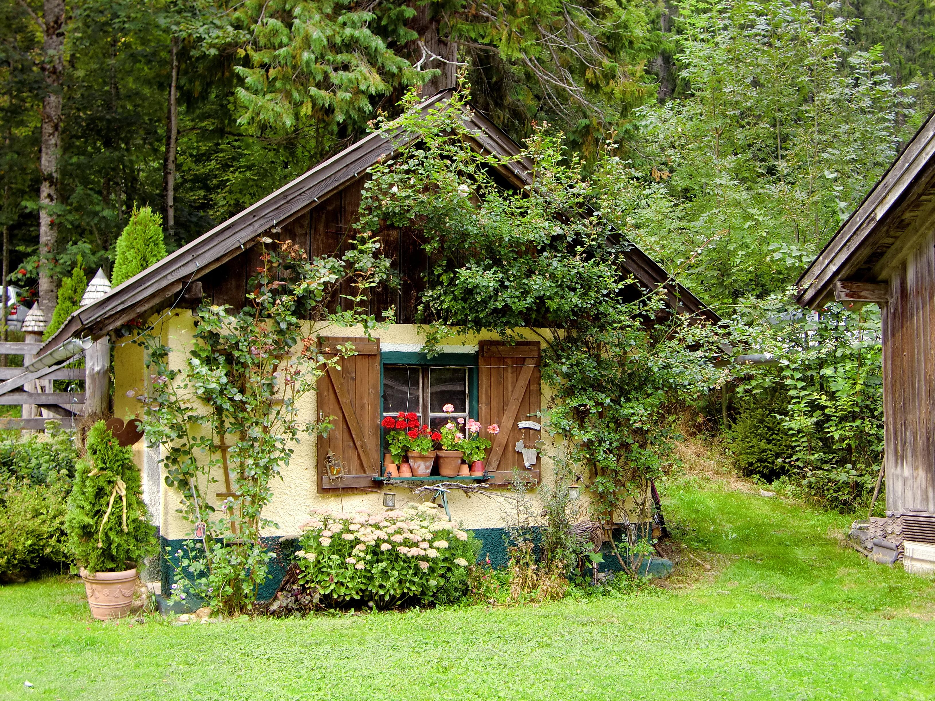 free images tree flower building home hut village jungle