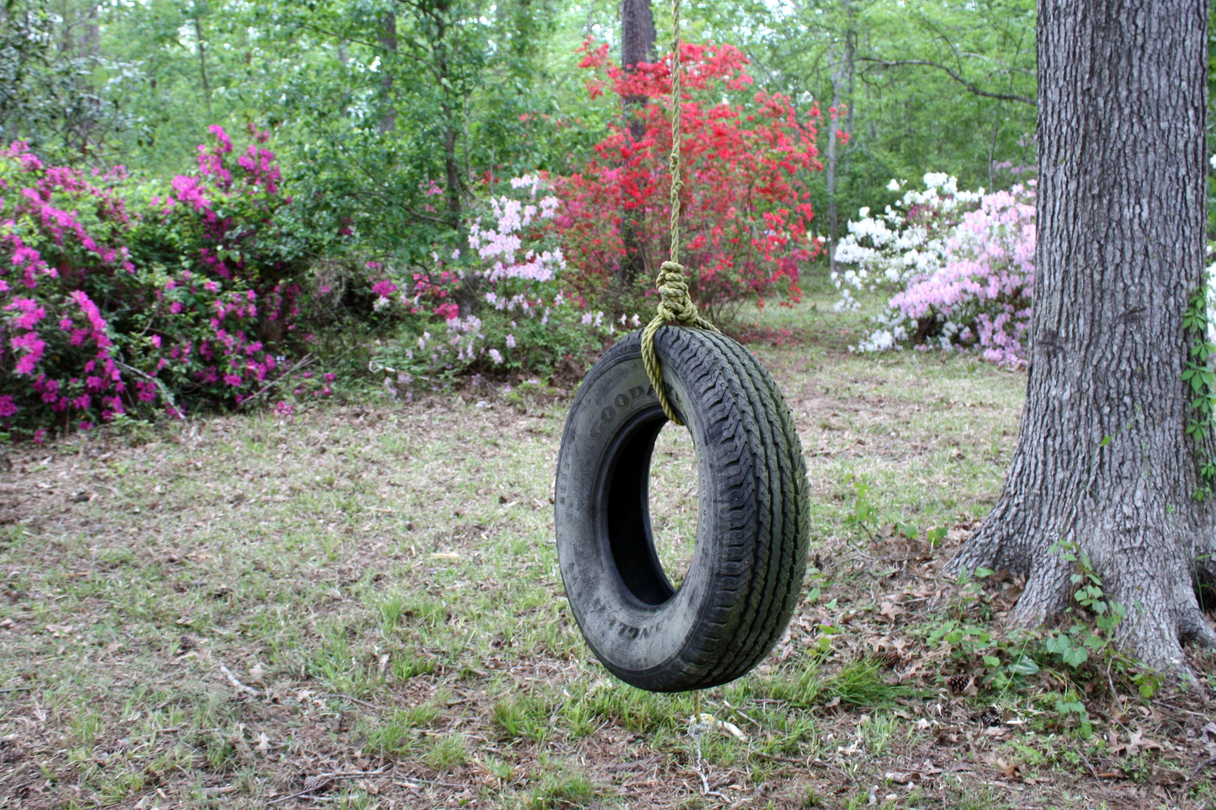 Tree Lawn Flower Backyard Garden Shrub Woodland Yard Azaleas Tire Swing