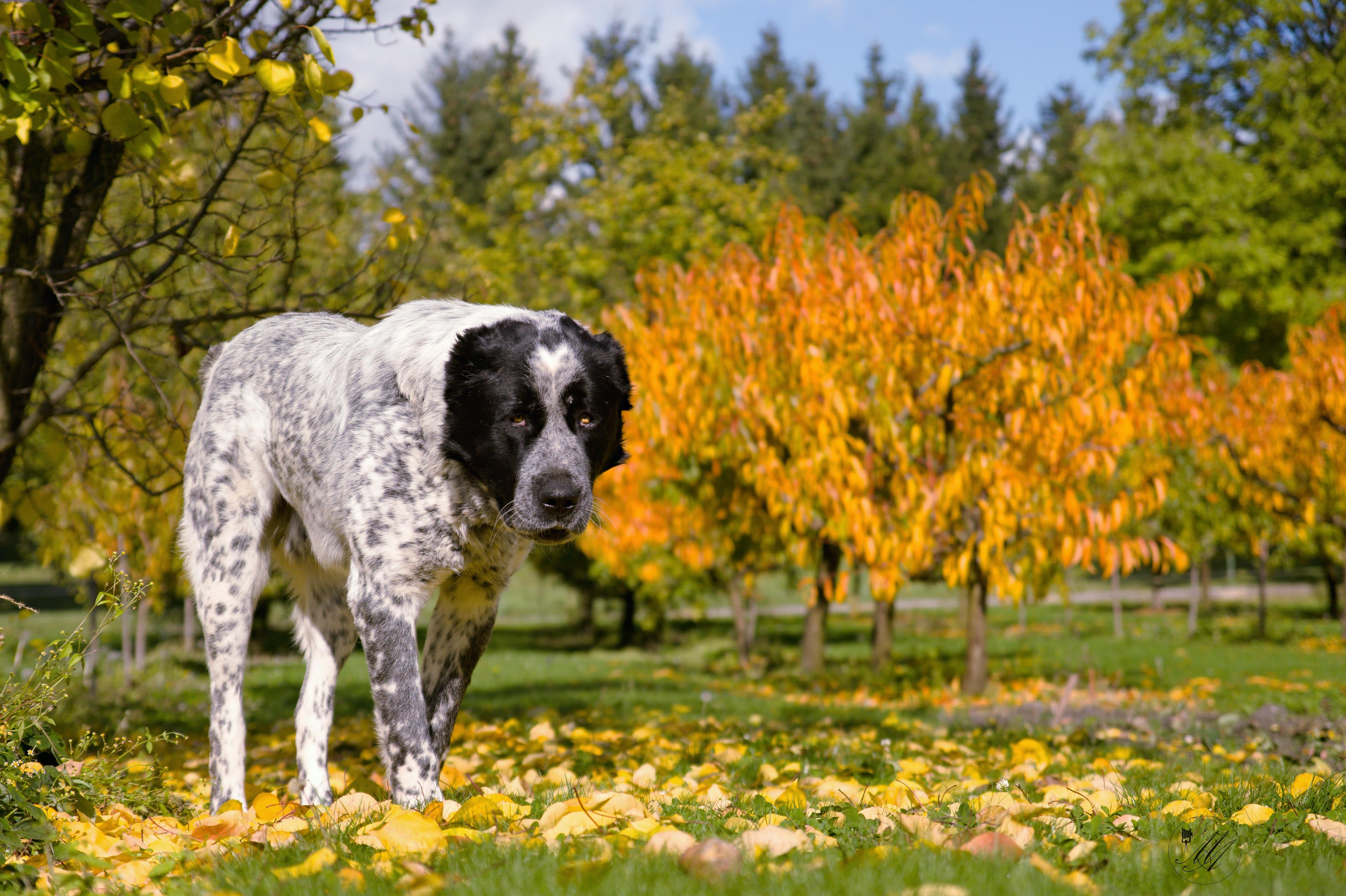 деревья картинки с собаками чувство солидности