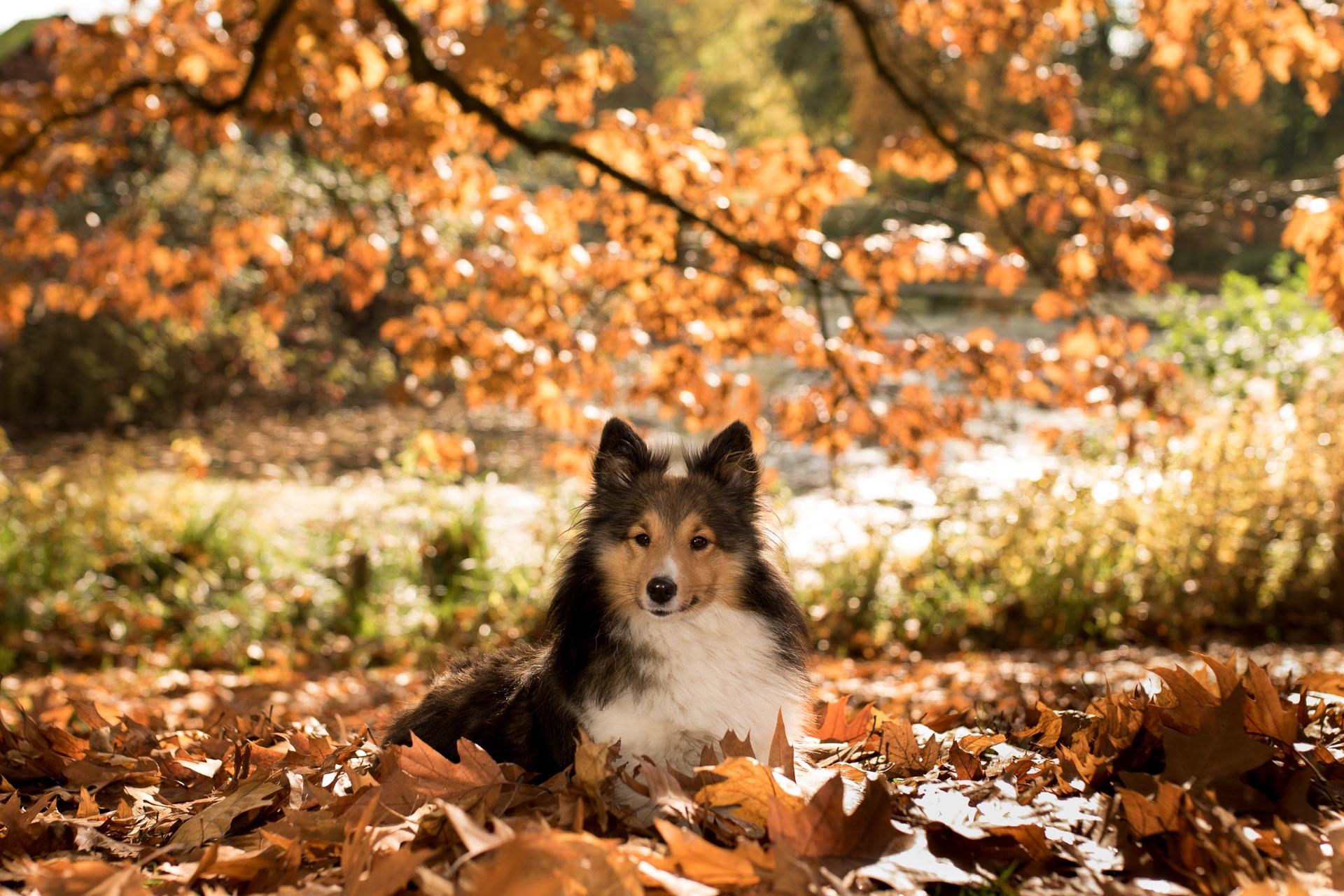 деревья картинки с собаками качестве объектов можно