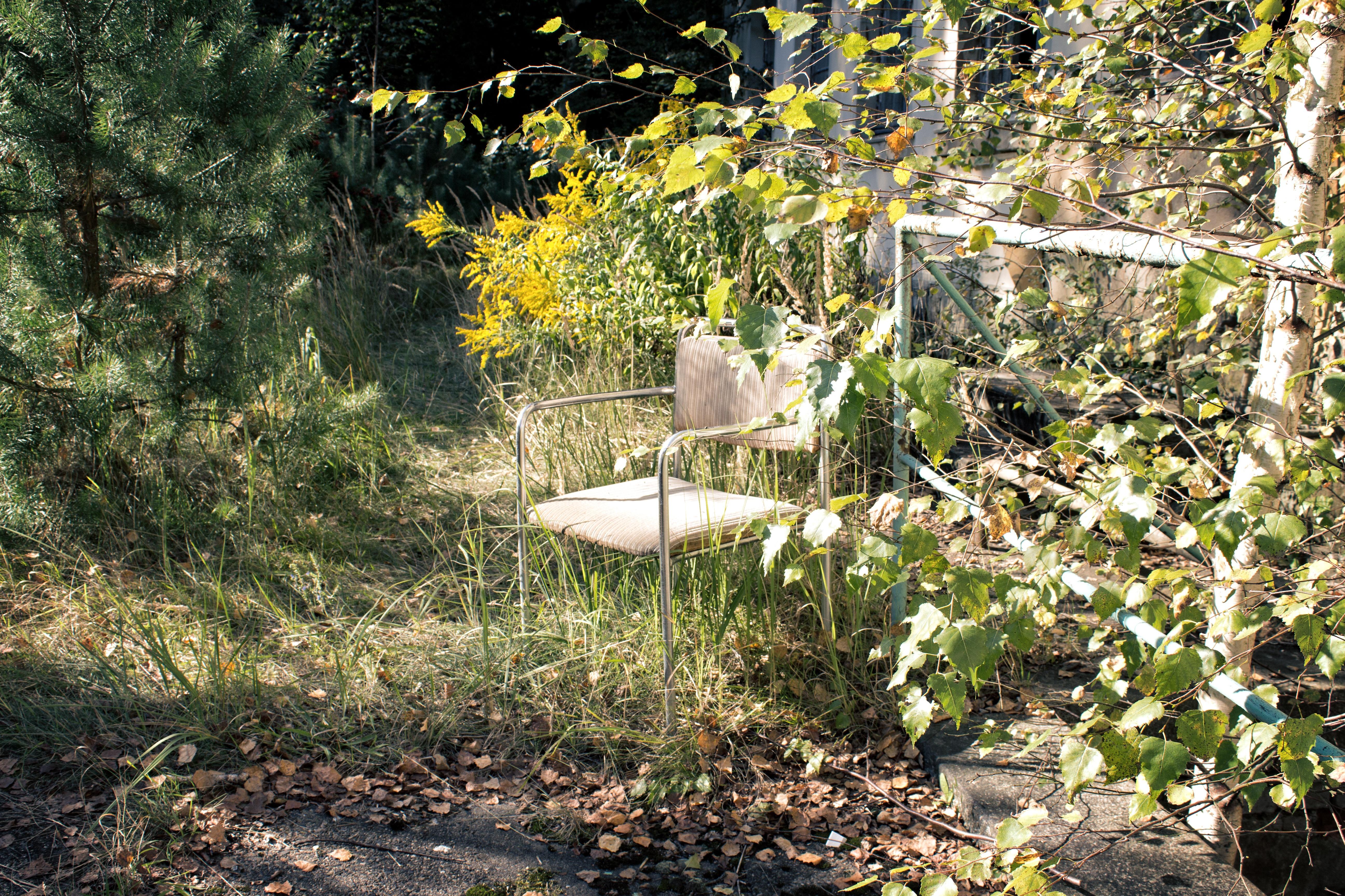 Kostenlose Foto Baum Blatt Blume Herbst Hinterhof Botanik