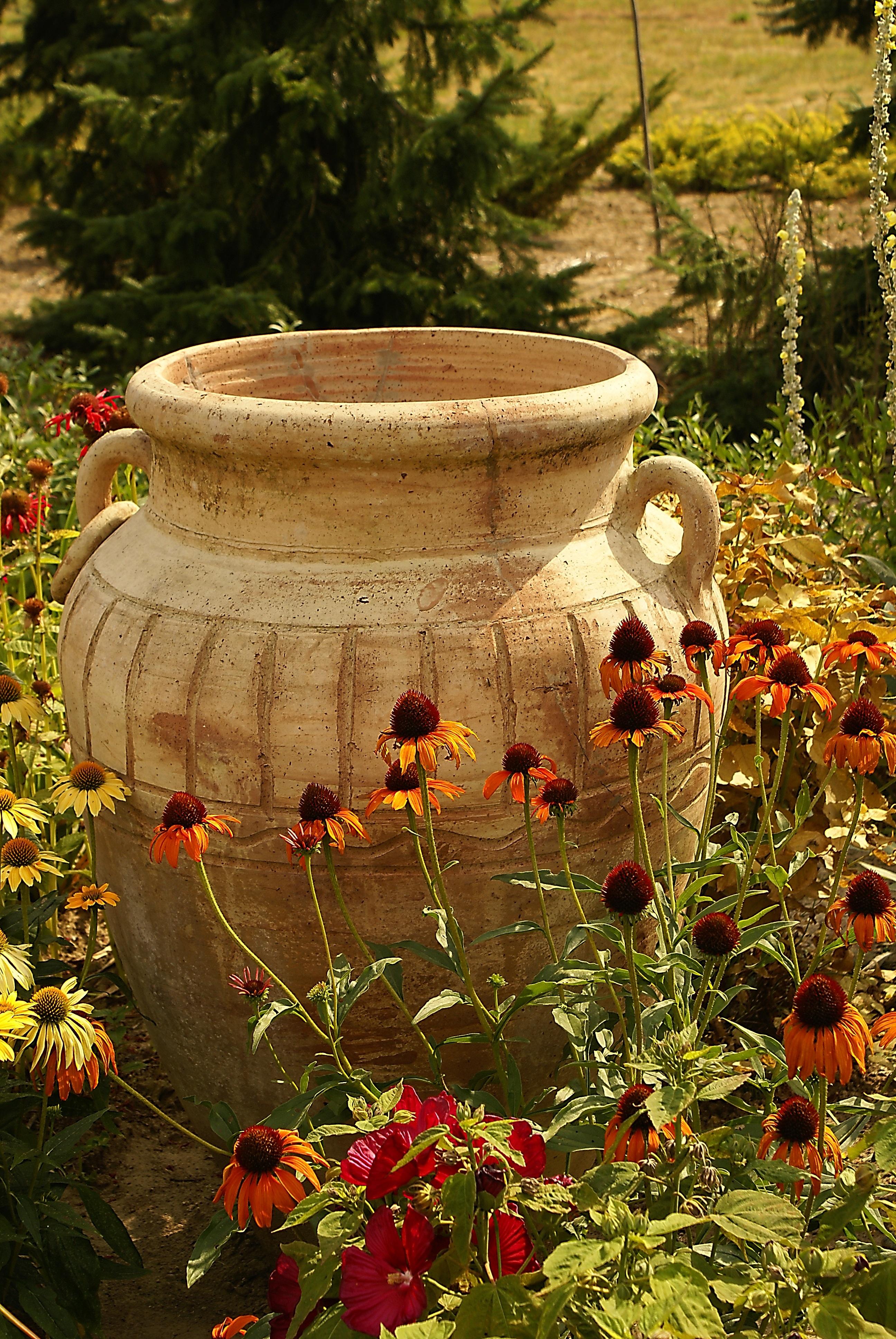 Yard Privacy Plants