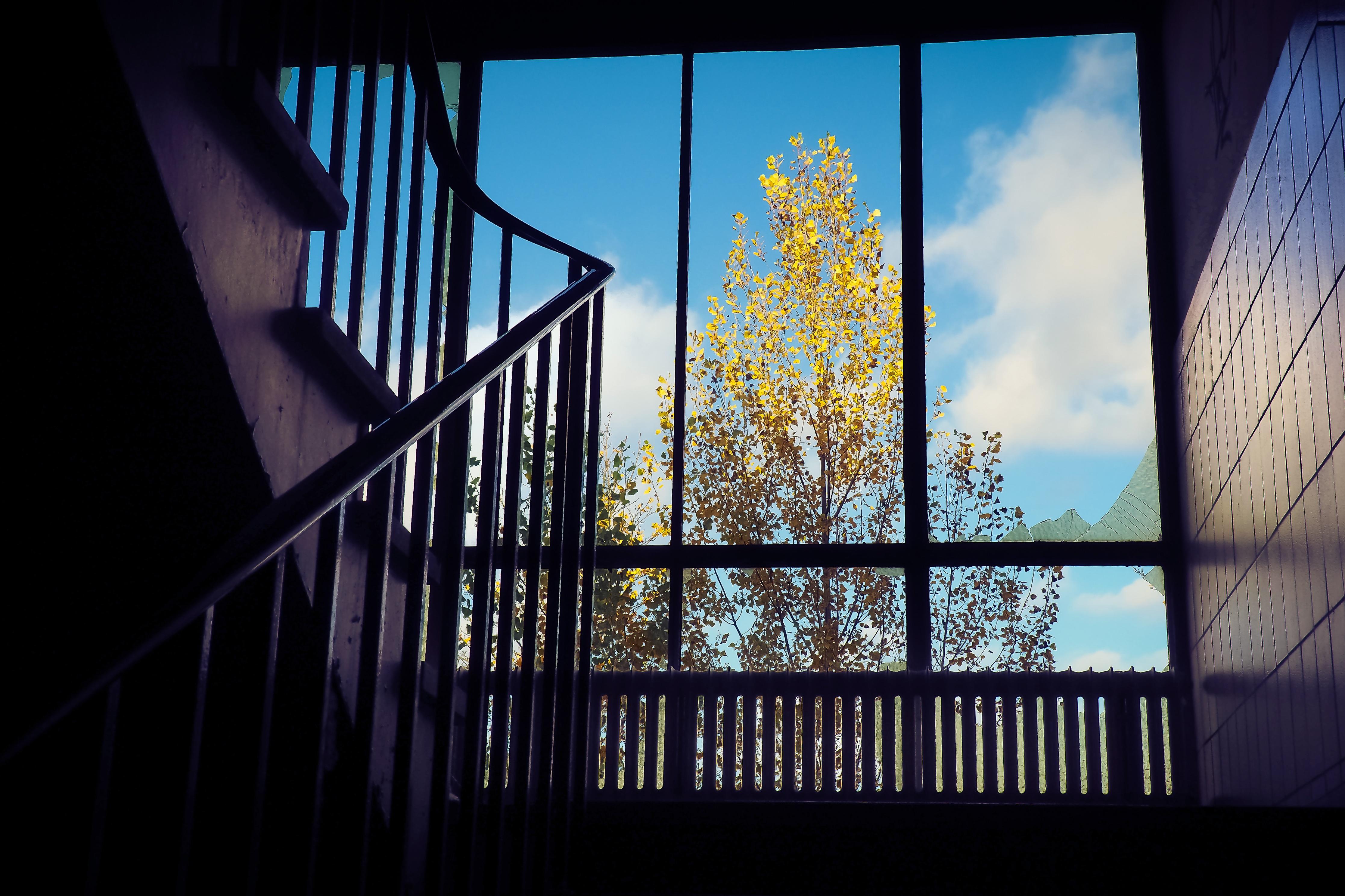 images gratuites arbre architecture nuit lumi re du soleil fen tre vieux atmosph re. Black Bedroom Furniture Sets. Home Design Ideas