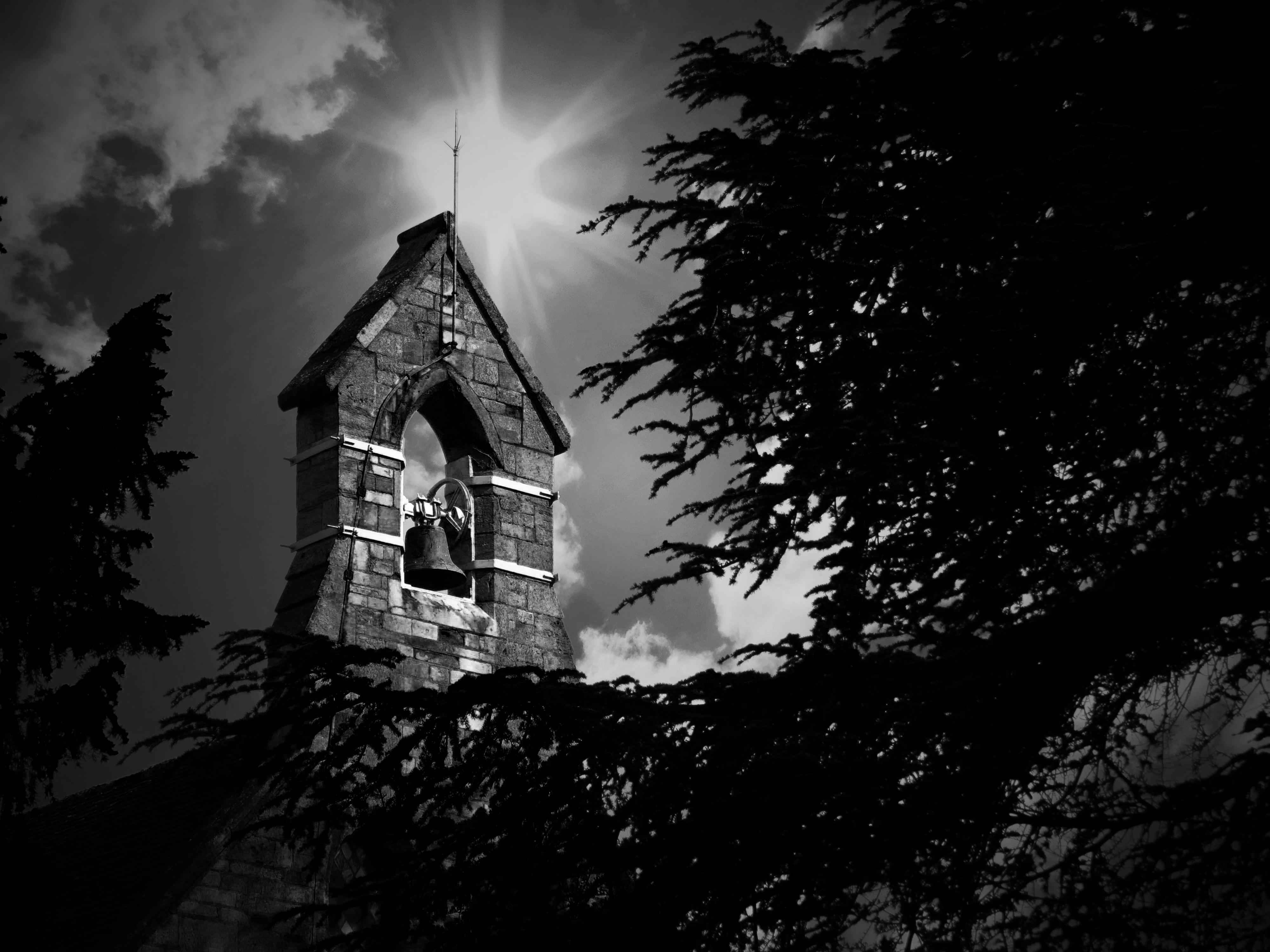 Images Gratuites Arbre Noir Et Blanc Ciel Nuit La Photographie
