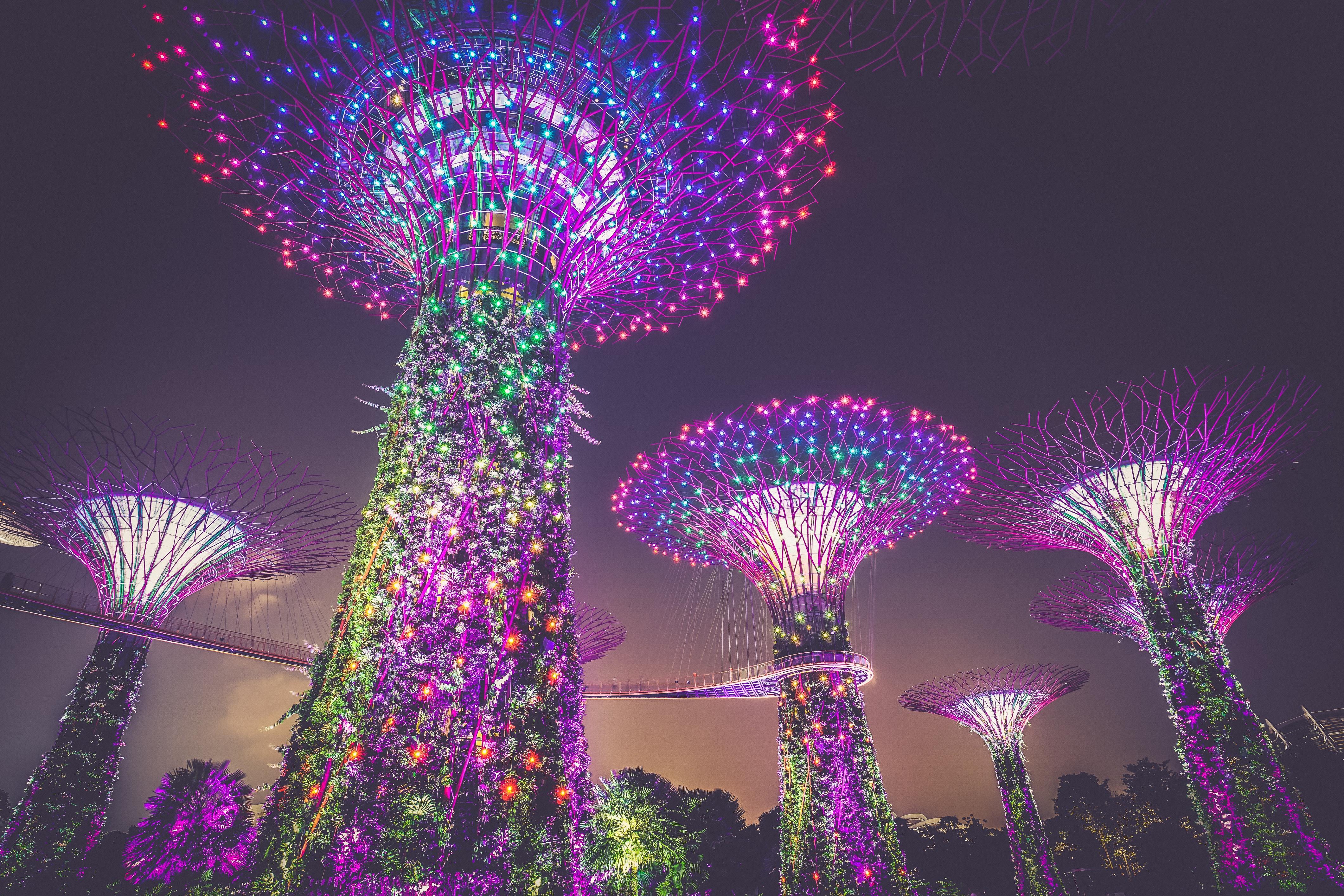 Free Images : tree, light, night, flower, walkway, christmas ...