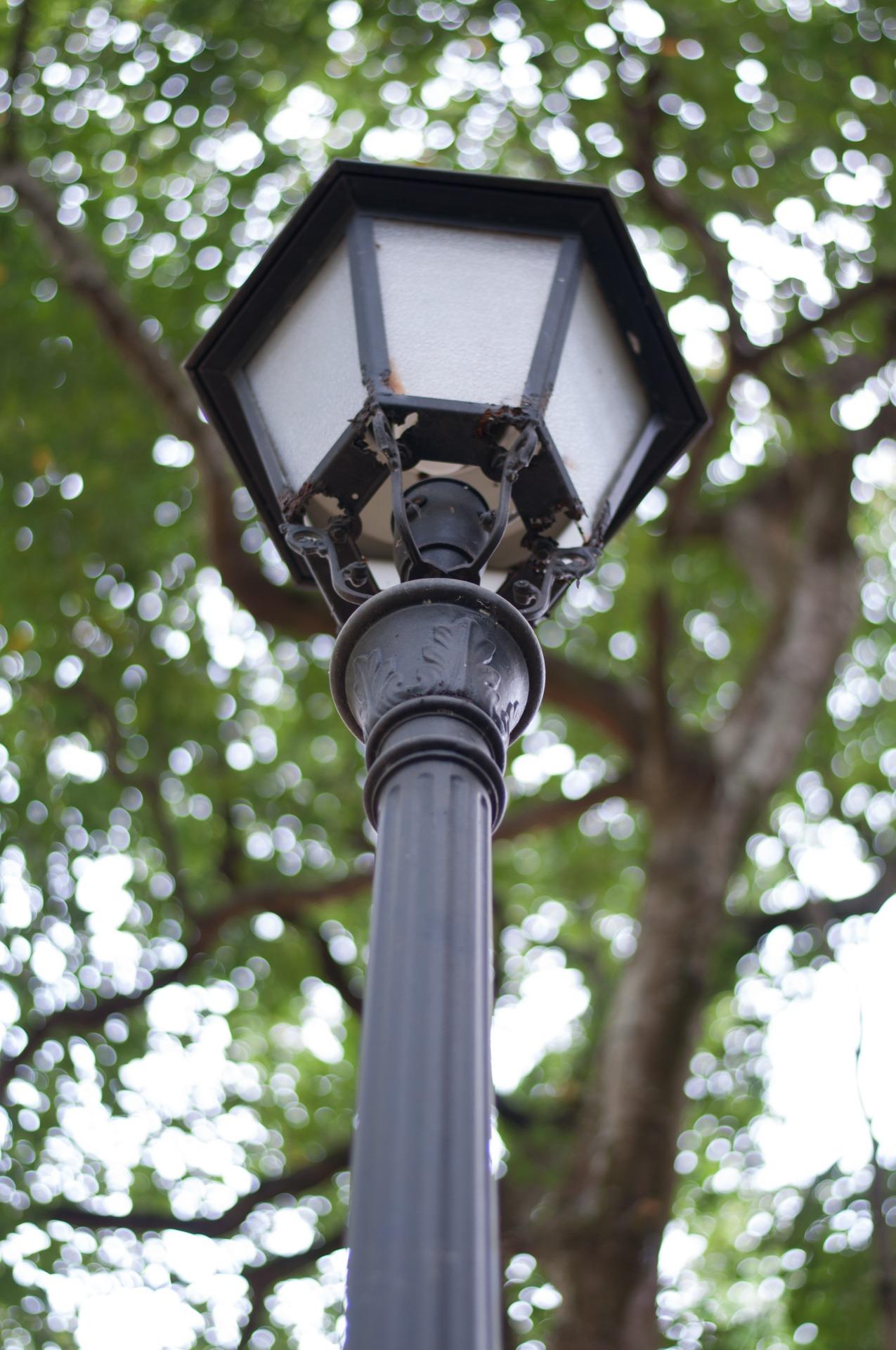 fotos gratis    u00e1rbol  ligero  ventana  verde  luz de la calle  poste de luz  l u00e1mpara
