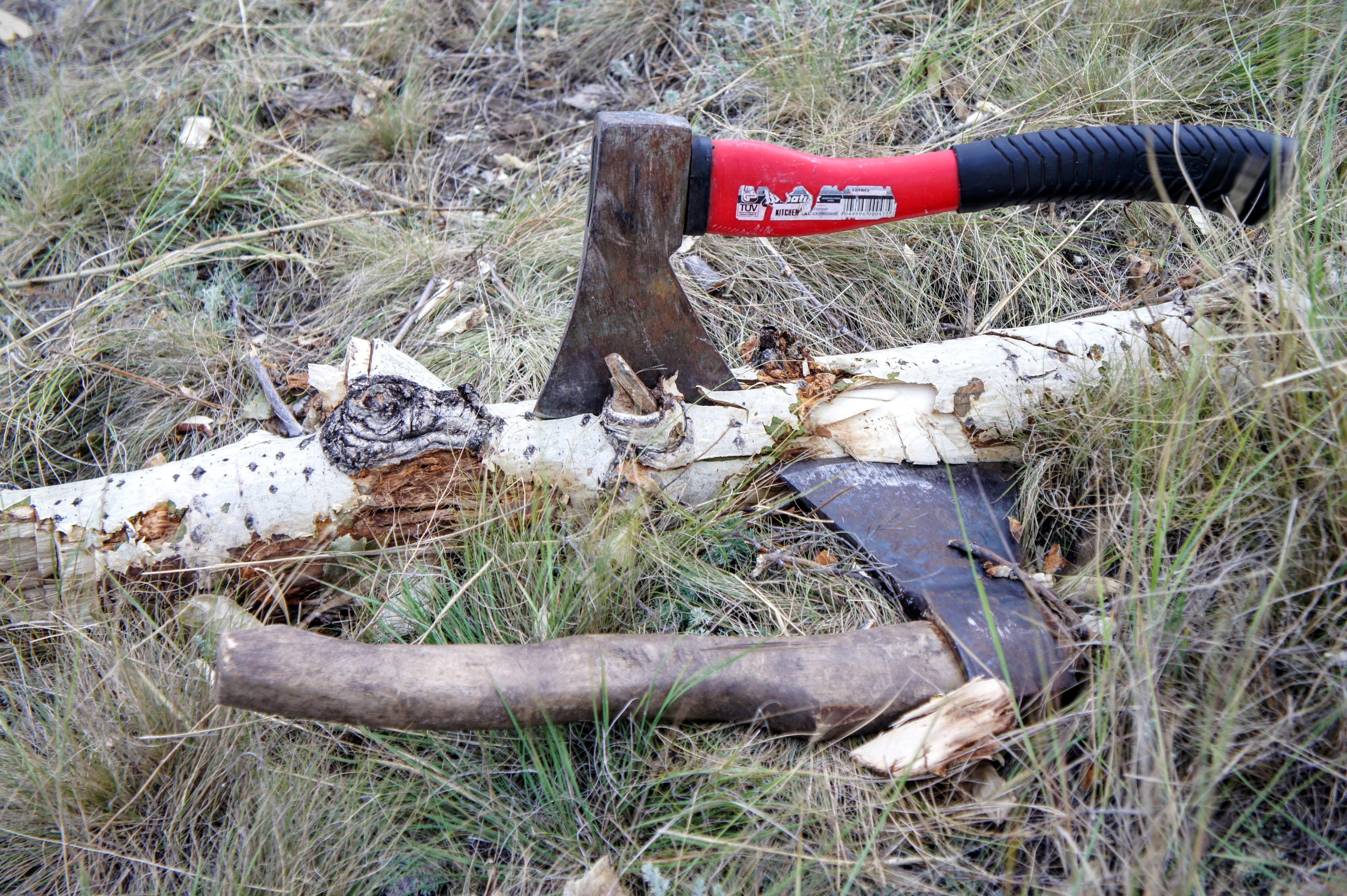 kostenlose foto : baum, log, boden, axt, protokollierung, baumstumpf