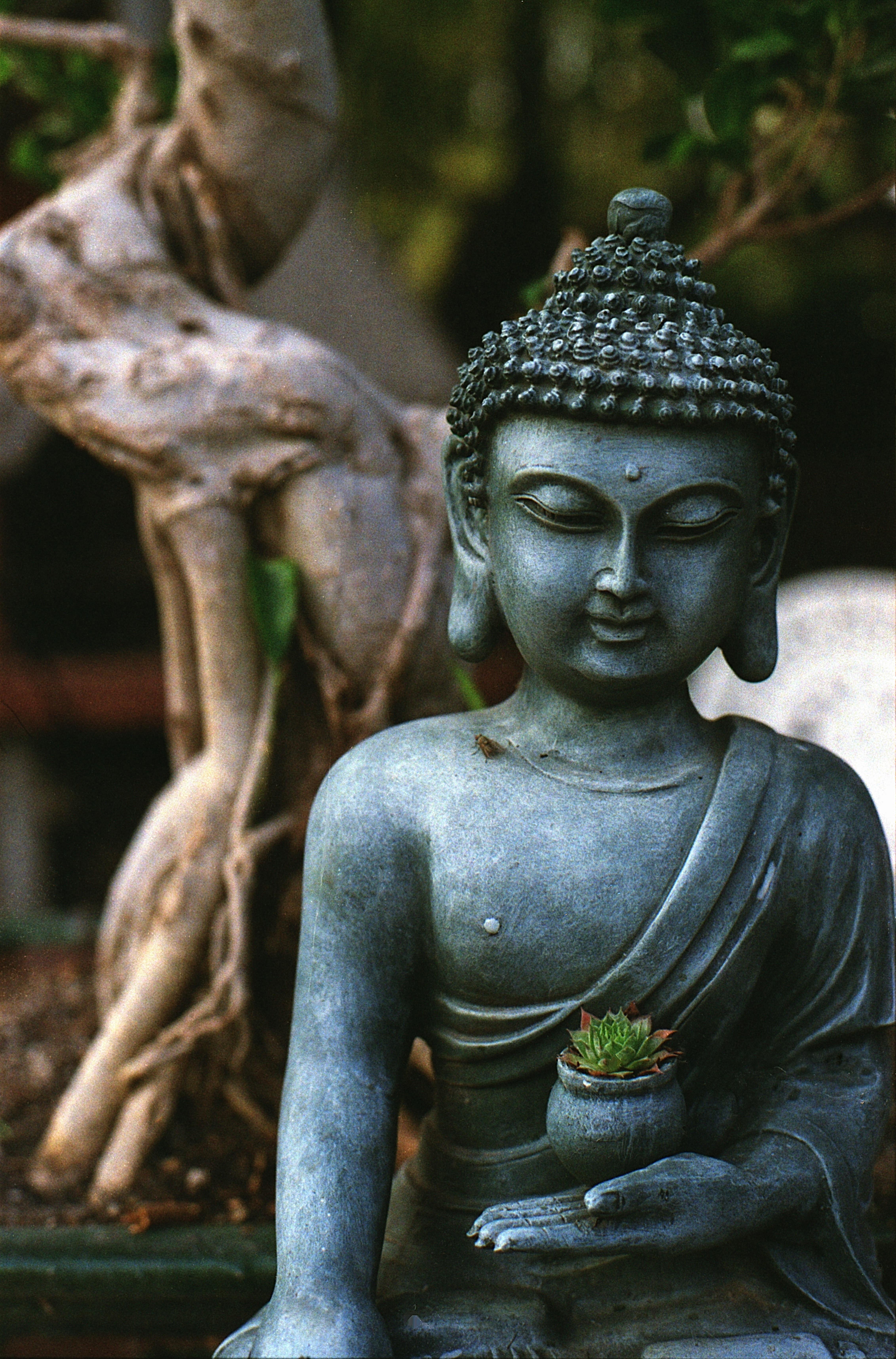 Fotos gratis rbol monumento tranquilidad estatua for Meditacion paz interior