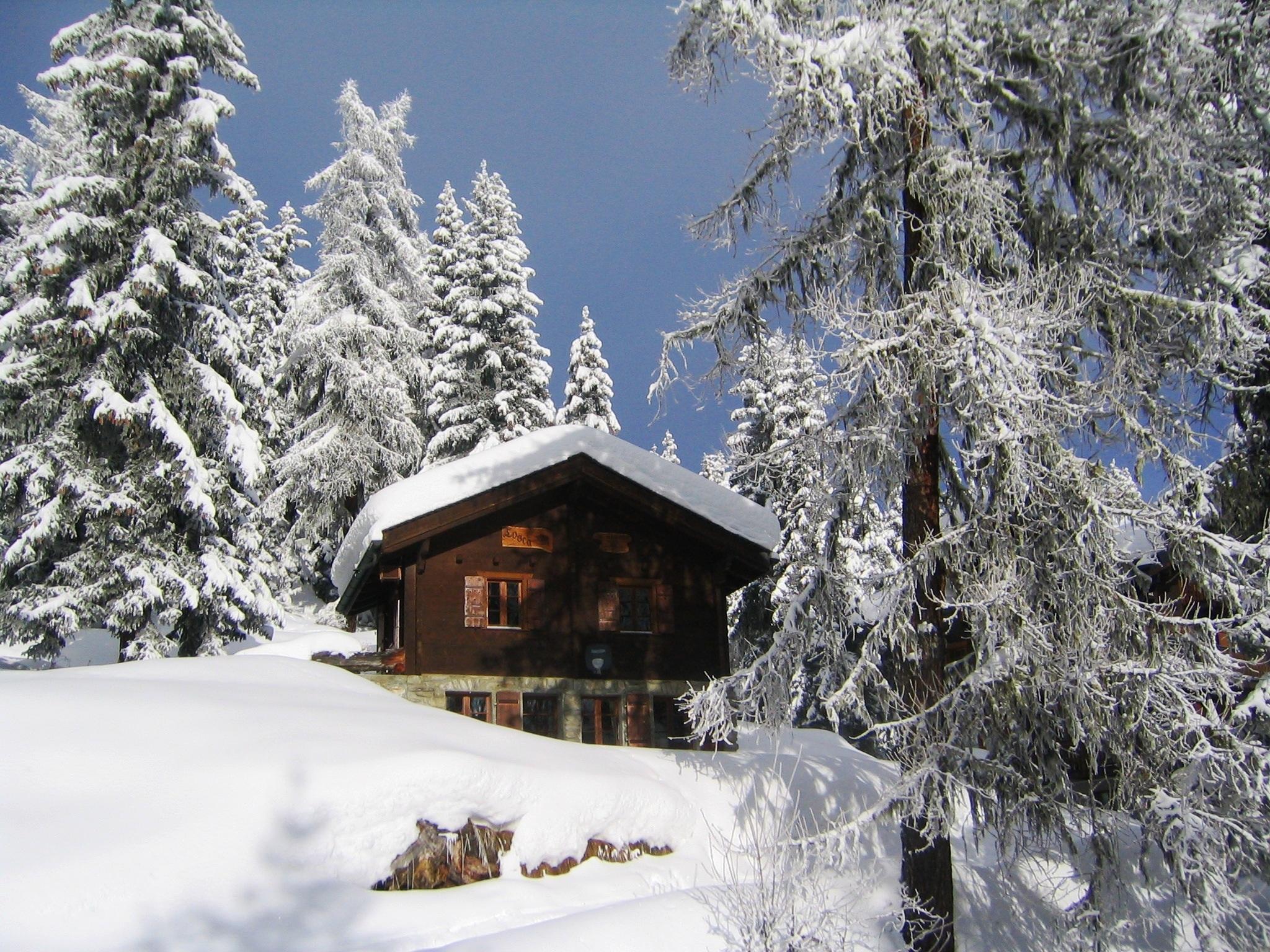 Images gratuites arbre montagne neige hiver gel - Photos de neige gratuites ...