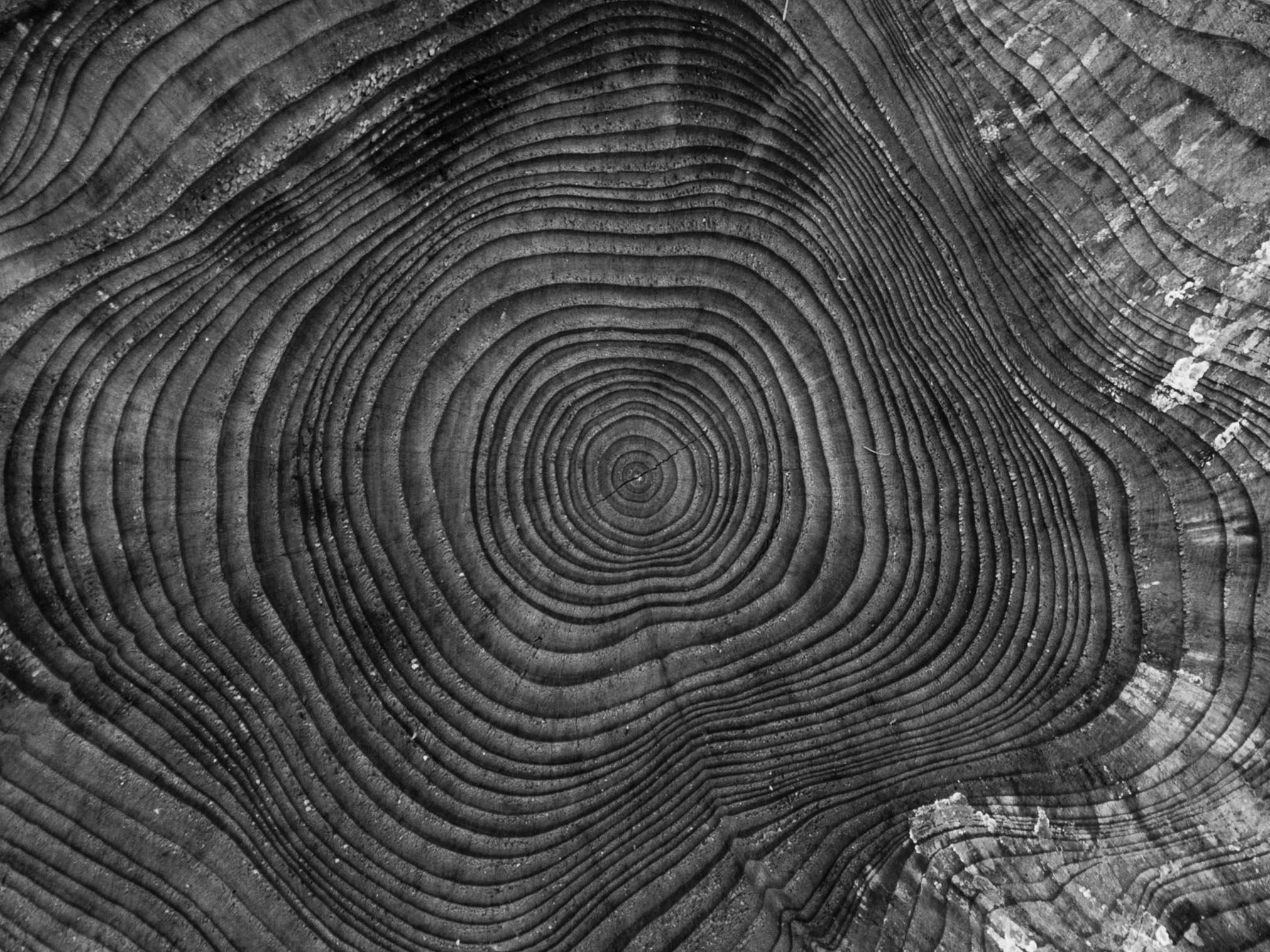 Images Gratuites Arbre La Nature Abstrait Noir Et Blanc