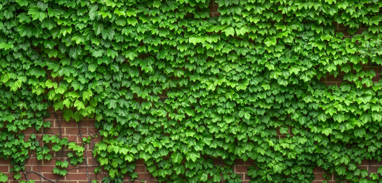 free images tree nature abstract vine texture leaf. Black Bedroom Furniture Sets. Home Design Ideas