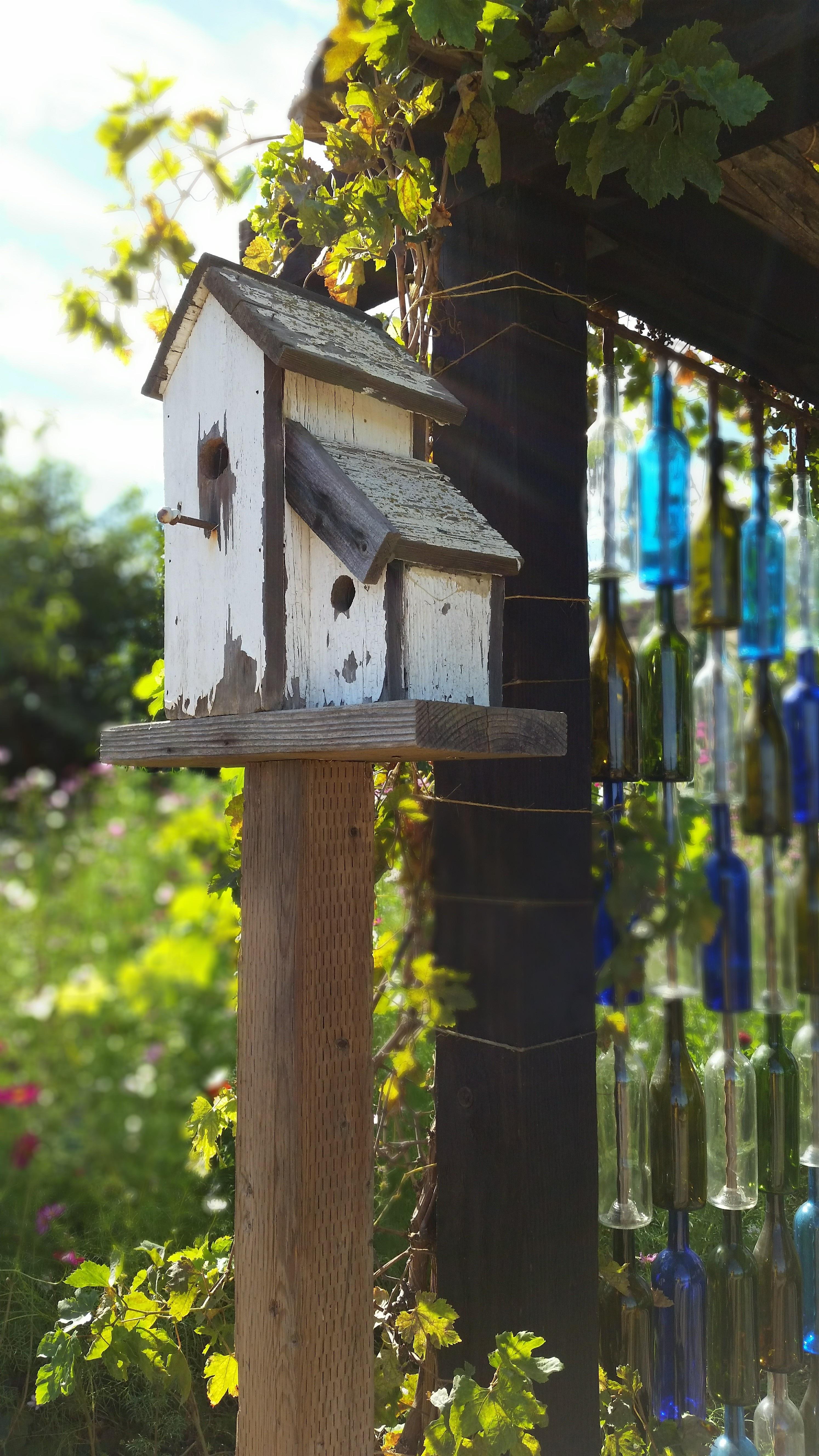 Arbre Bois Blanc Decoration images gratuites : arbre, la nature, oiseau, clôture