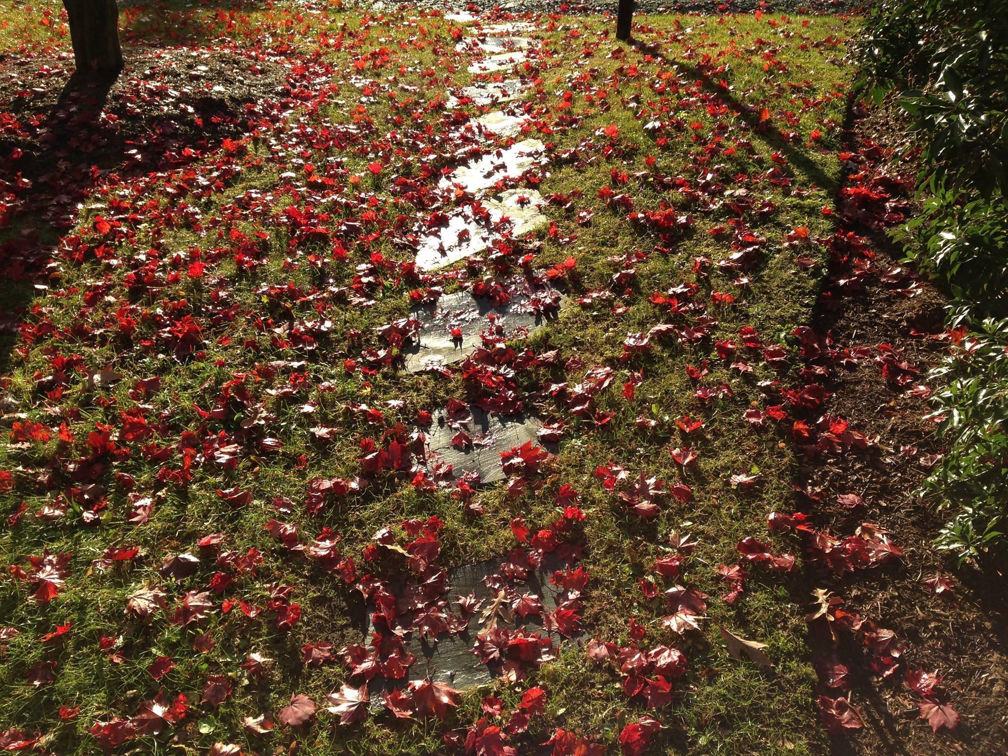 Free Images : tree, nature, blossom, light, sunset, leaf, flower ...