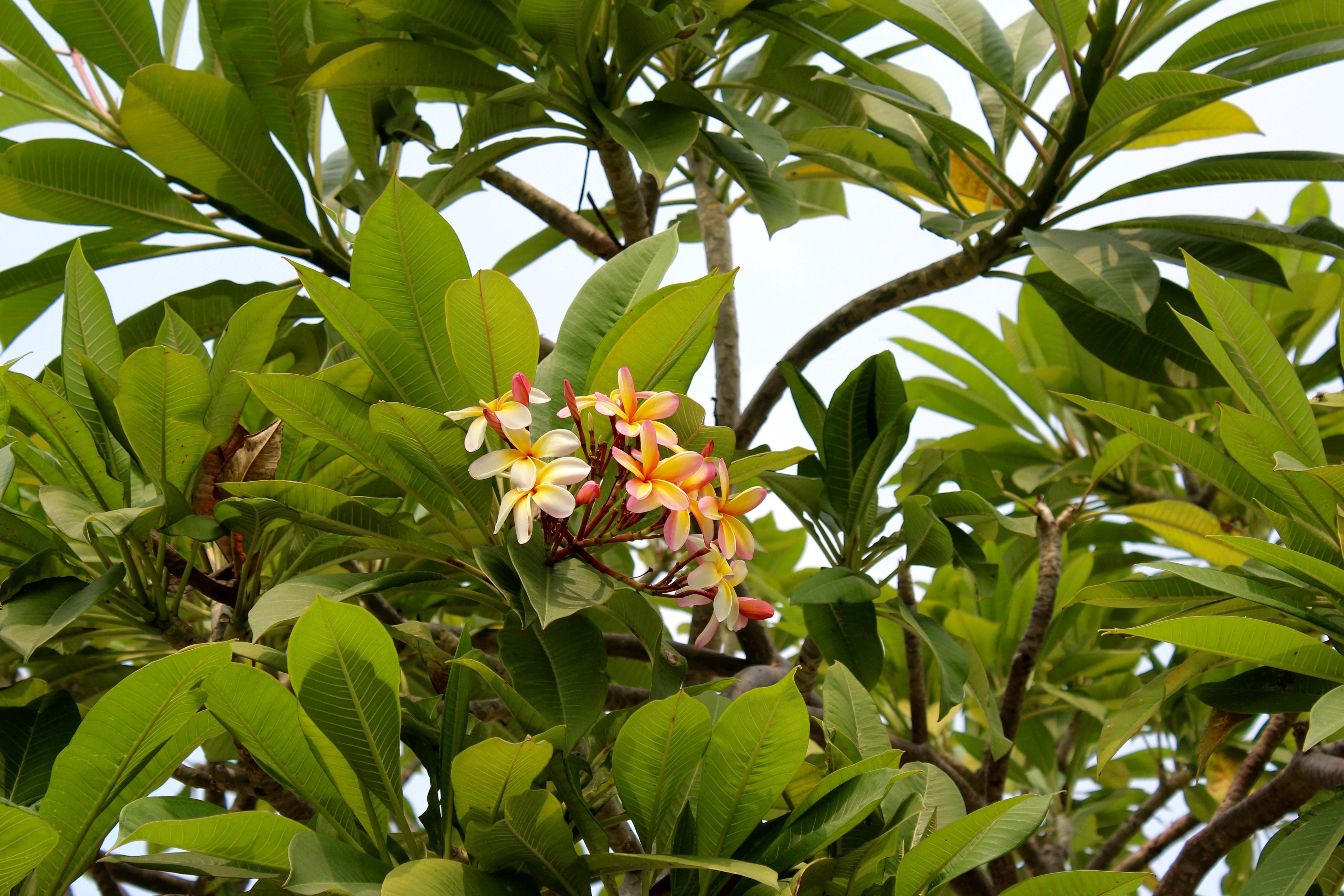 Fotos gratis rbol naturaleza flor fruta florecer for Arbustos de hoja caduca