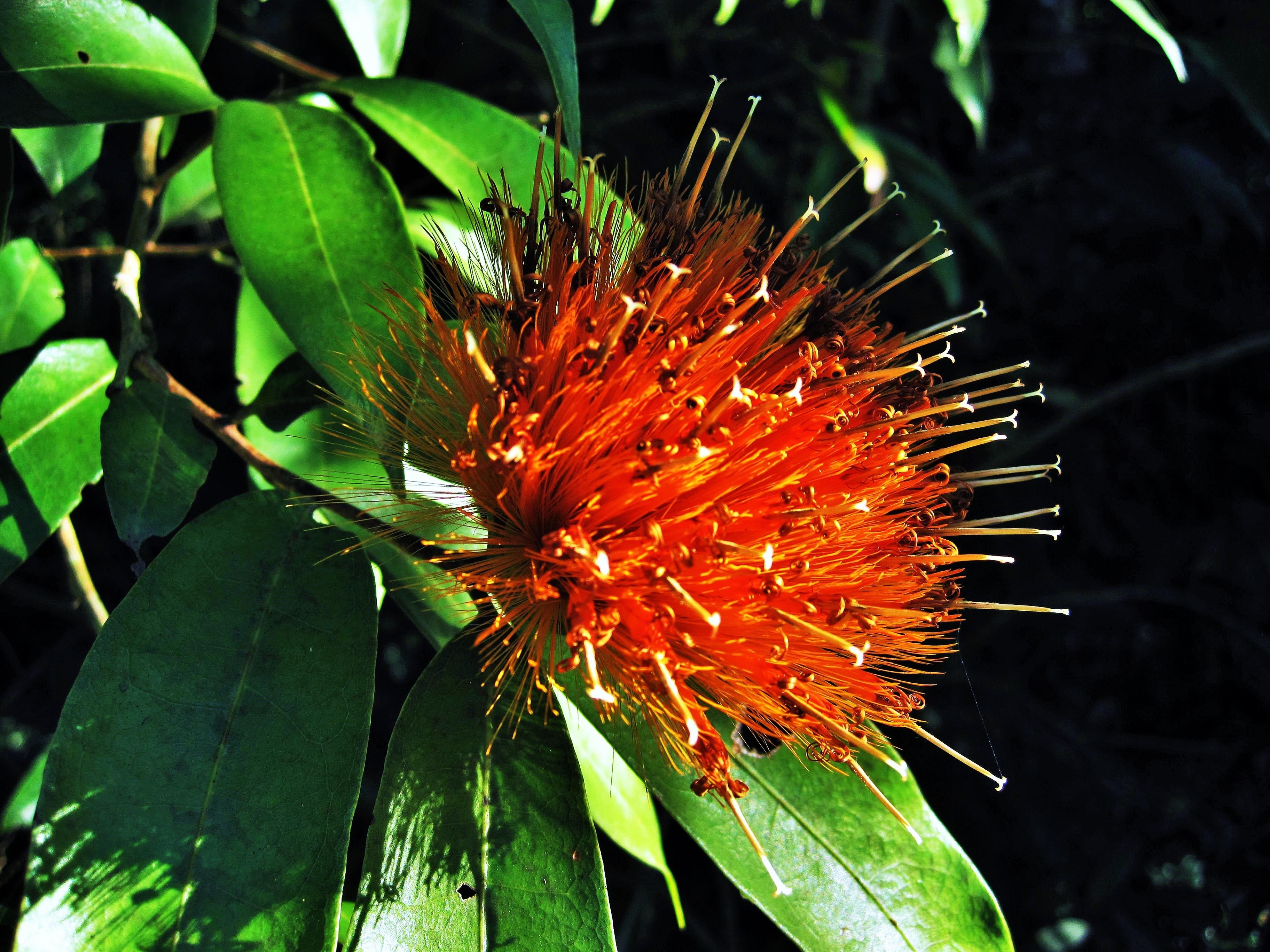 Extrêmement Images Gratuites : arbre, la nature, fleur, feuille, Floraison  HC88