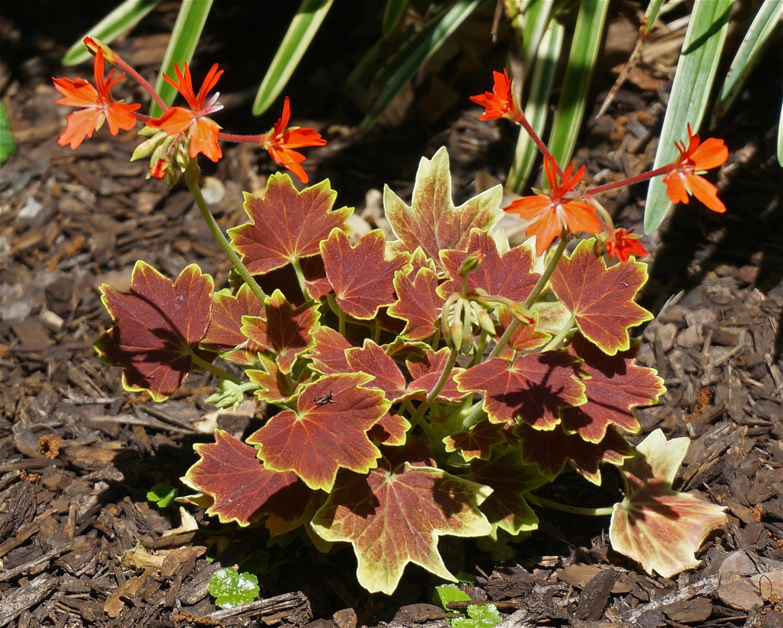Images gratuites arbre la nature fleur feuille for Plante ligneuse