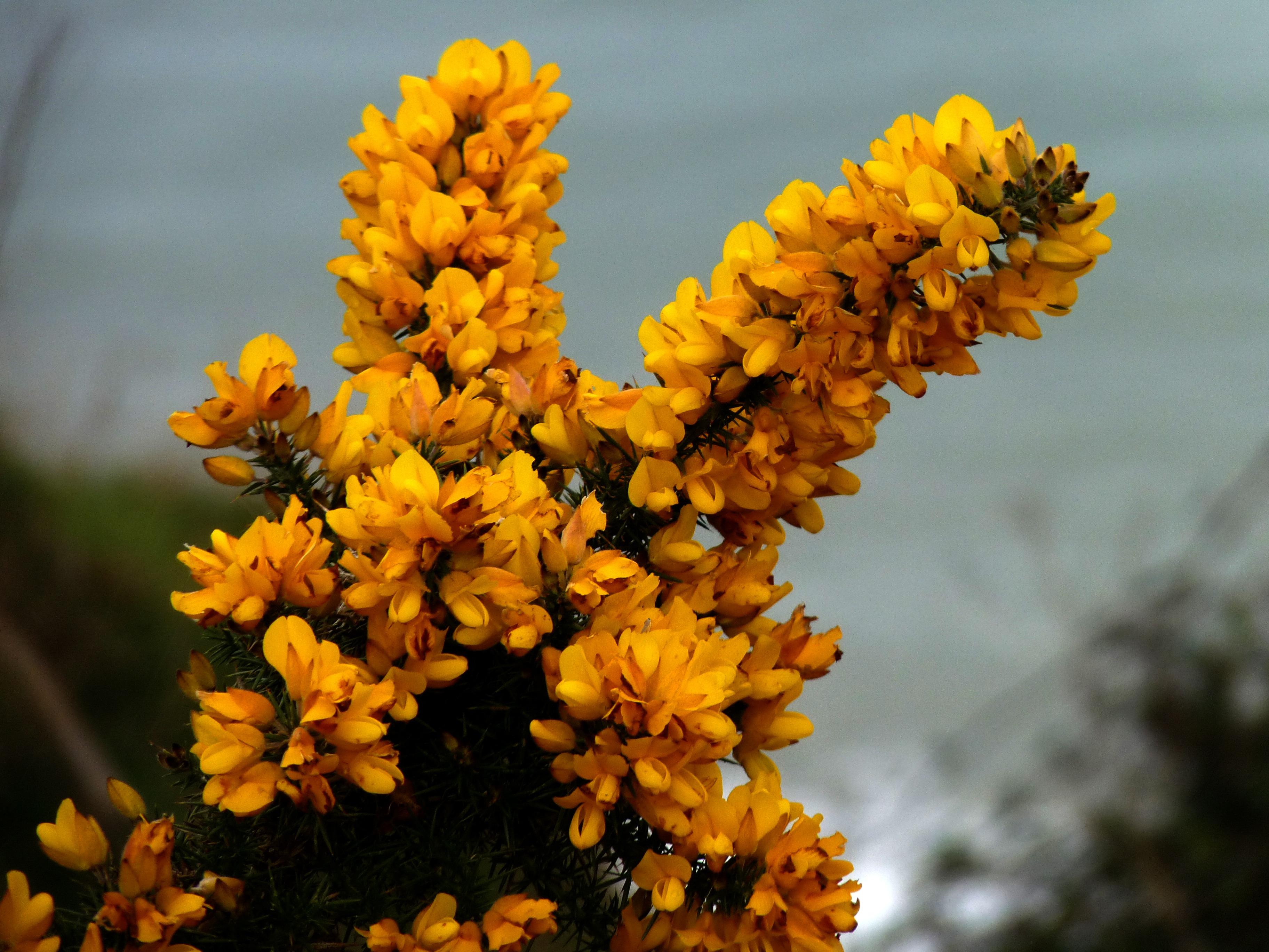 Free Images : tree, nature, blossom, leaf, bloom, summer ...