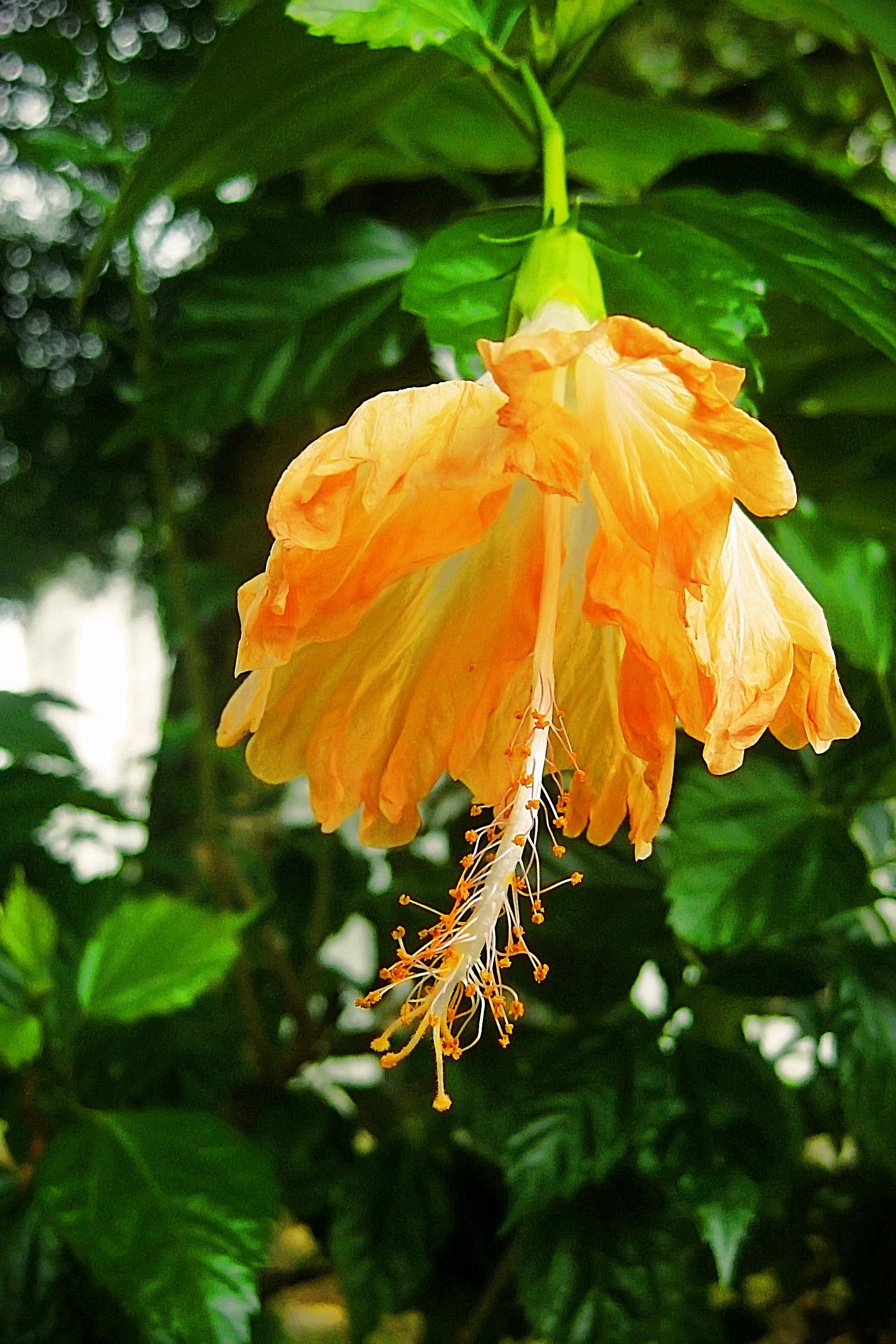 images gratuites arbre la nature fleur feuille orange l 39 automne botanique jaune flore. Black Bedroom Furniture Sets. Home Design Ideas