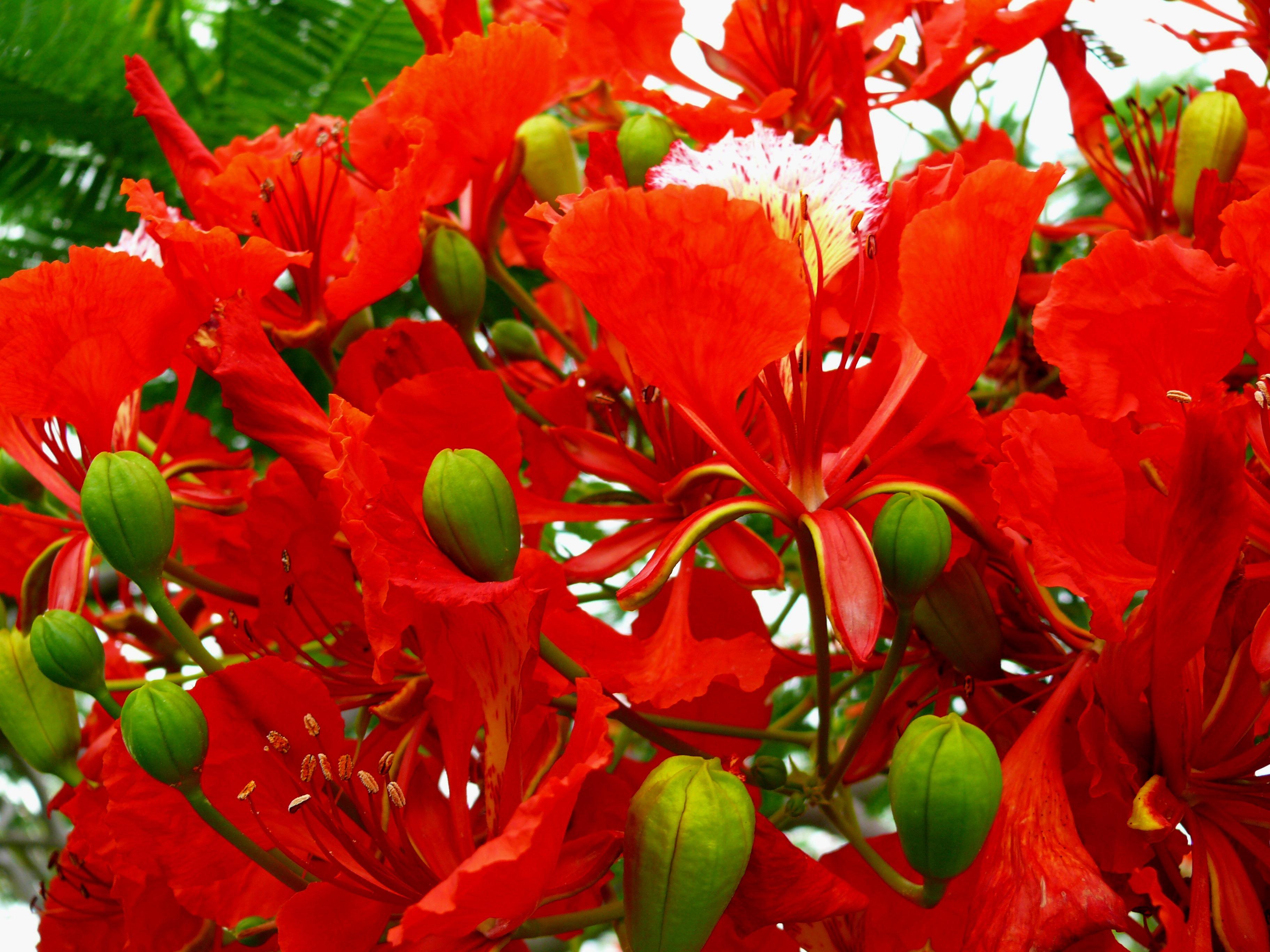 images gratuites : arbre, la nature, fleur, feuille, pétale