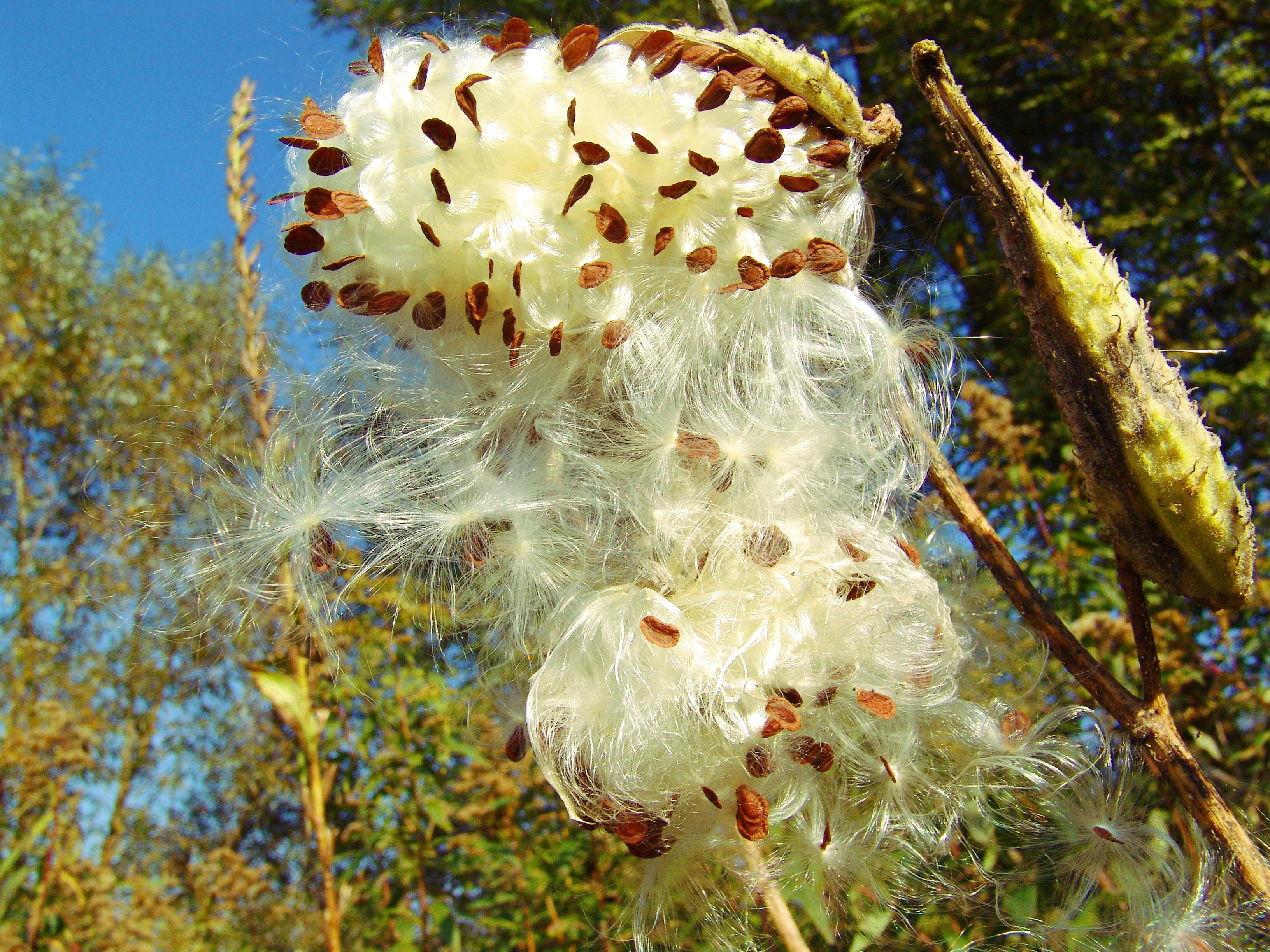 images gratuites : arbre, la nature, fleur, feuille, pollen