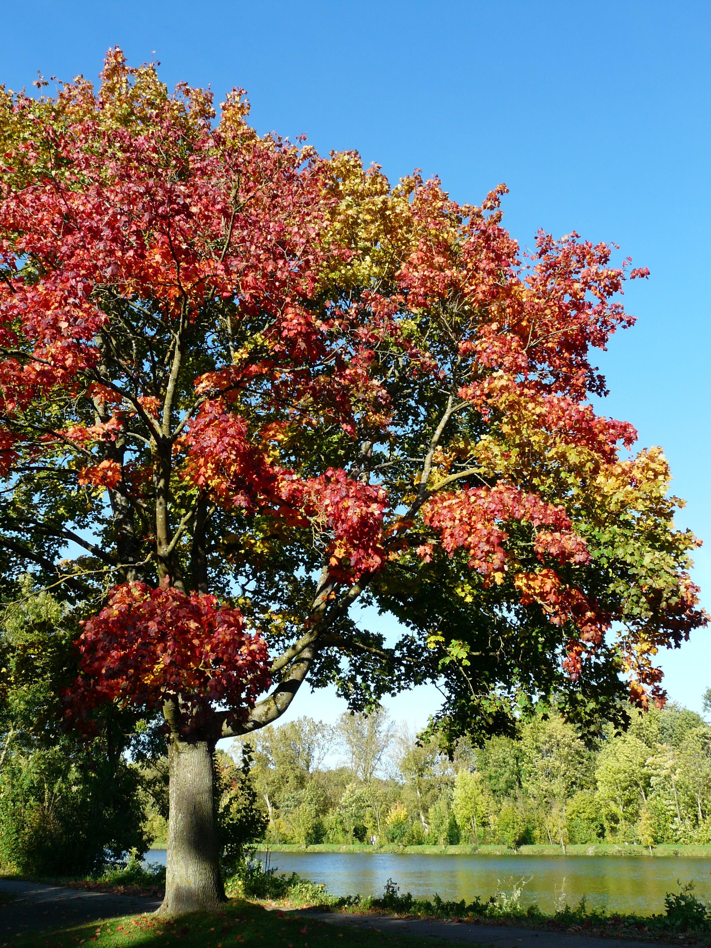 Free Images : nature, blossom, flower, river, park, botany, garden ...