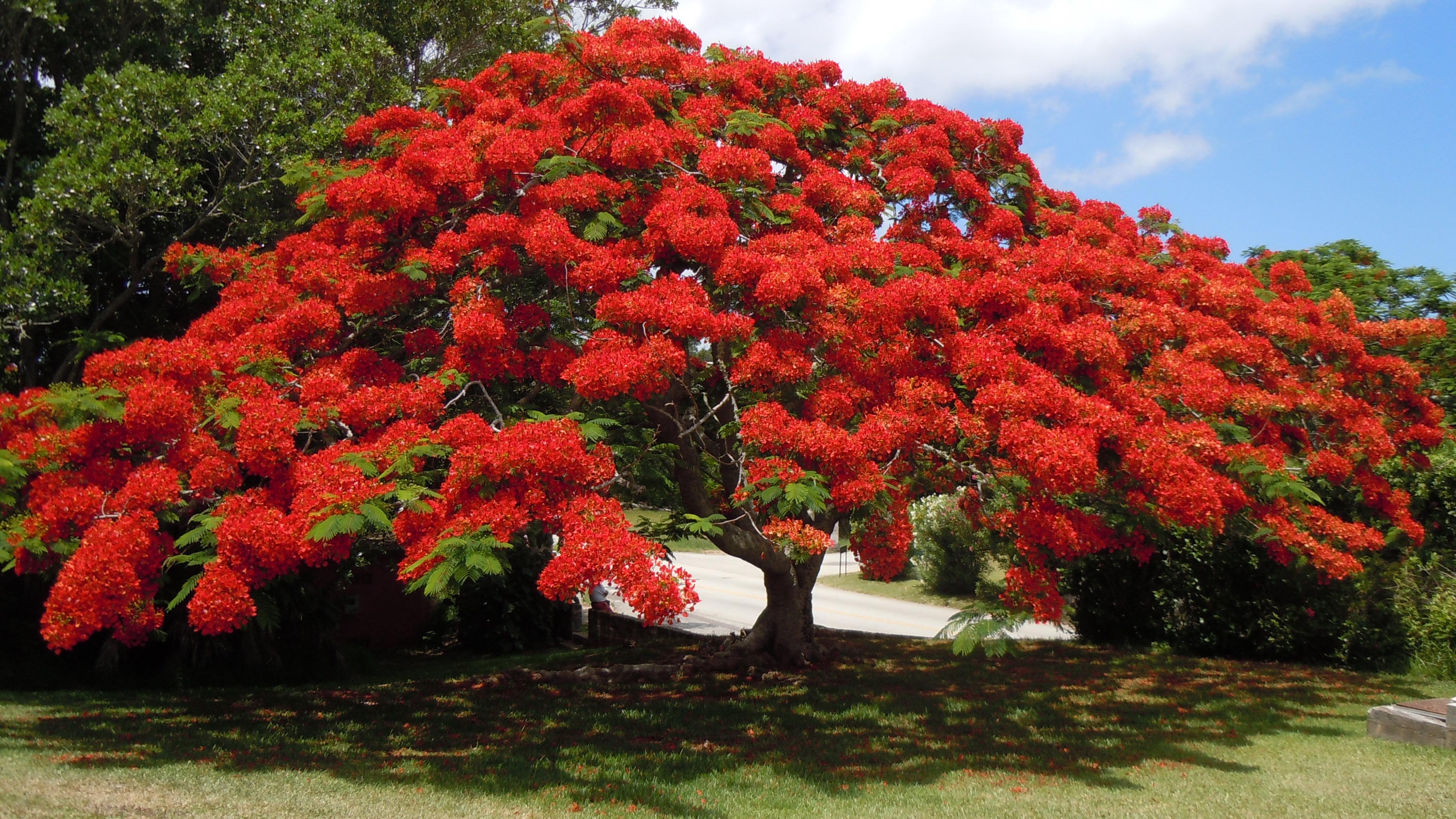 images gratuites arbre la nature fleur tige feuille p tale floraison tronc floral. Black Bedroom Furniture Sets. Home Design Ideas