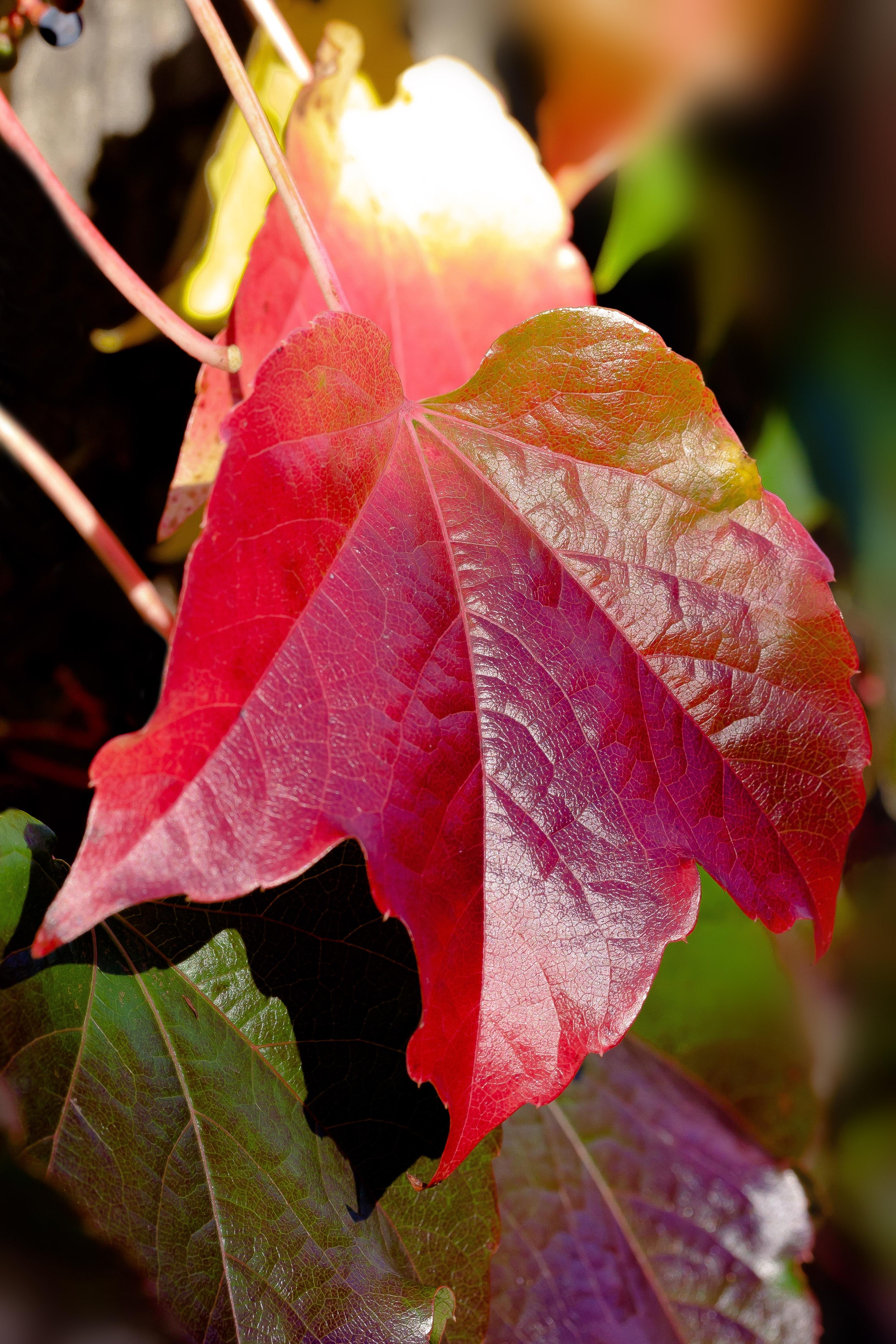 Kostenlose foto : Baum, Natur, blühen, Sonne, Blatt, Blume ...