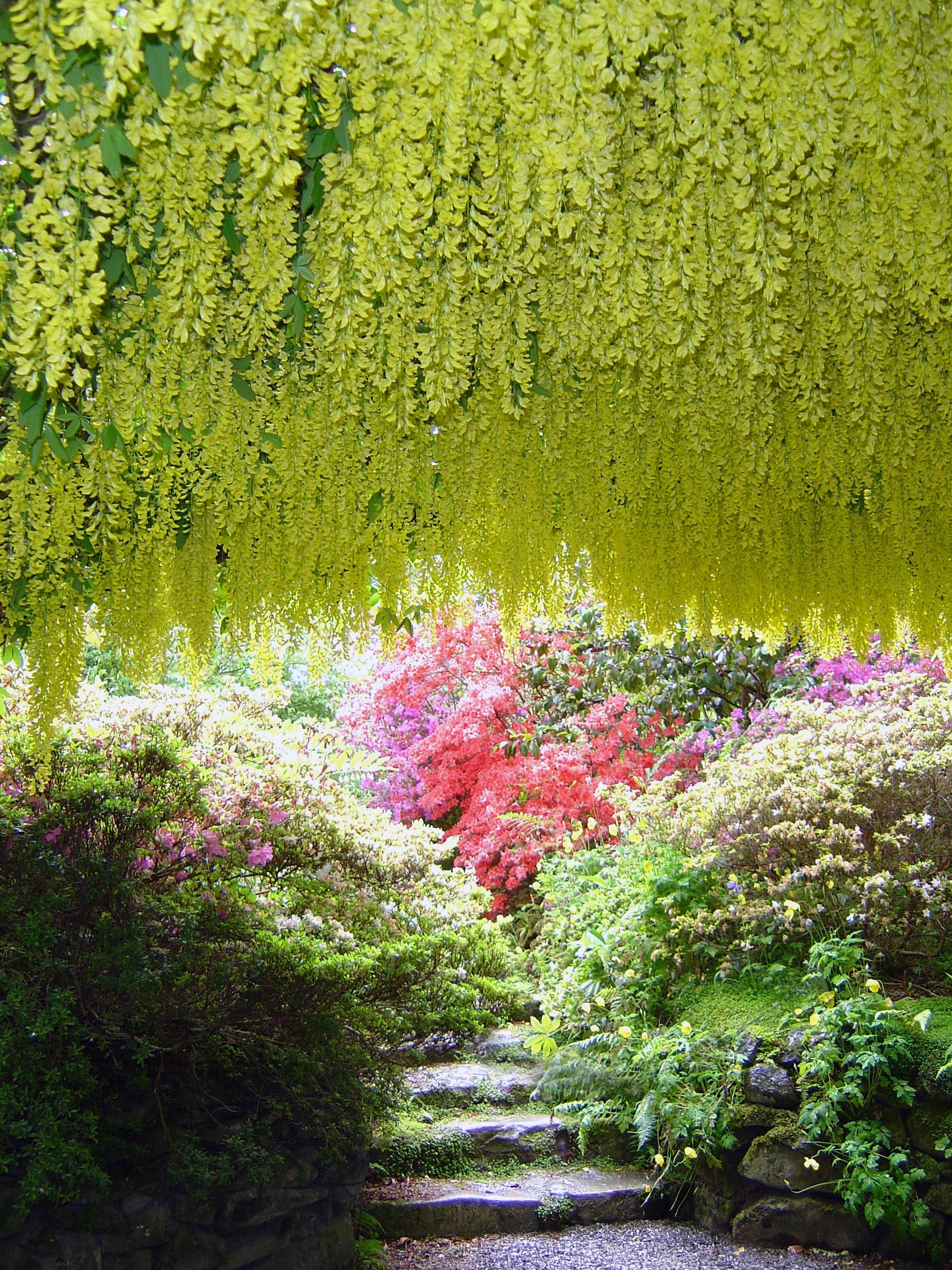 Gratis afbeeldingen boom natuur bloesem fabriek for Mooie tuinen afbeeldingen
