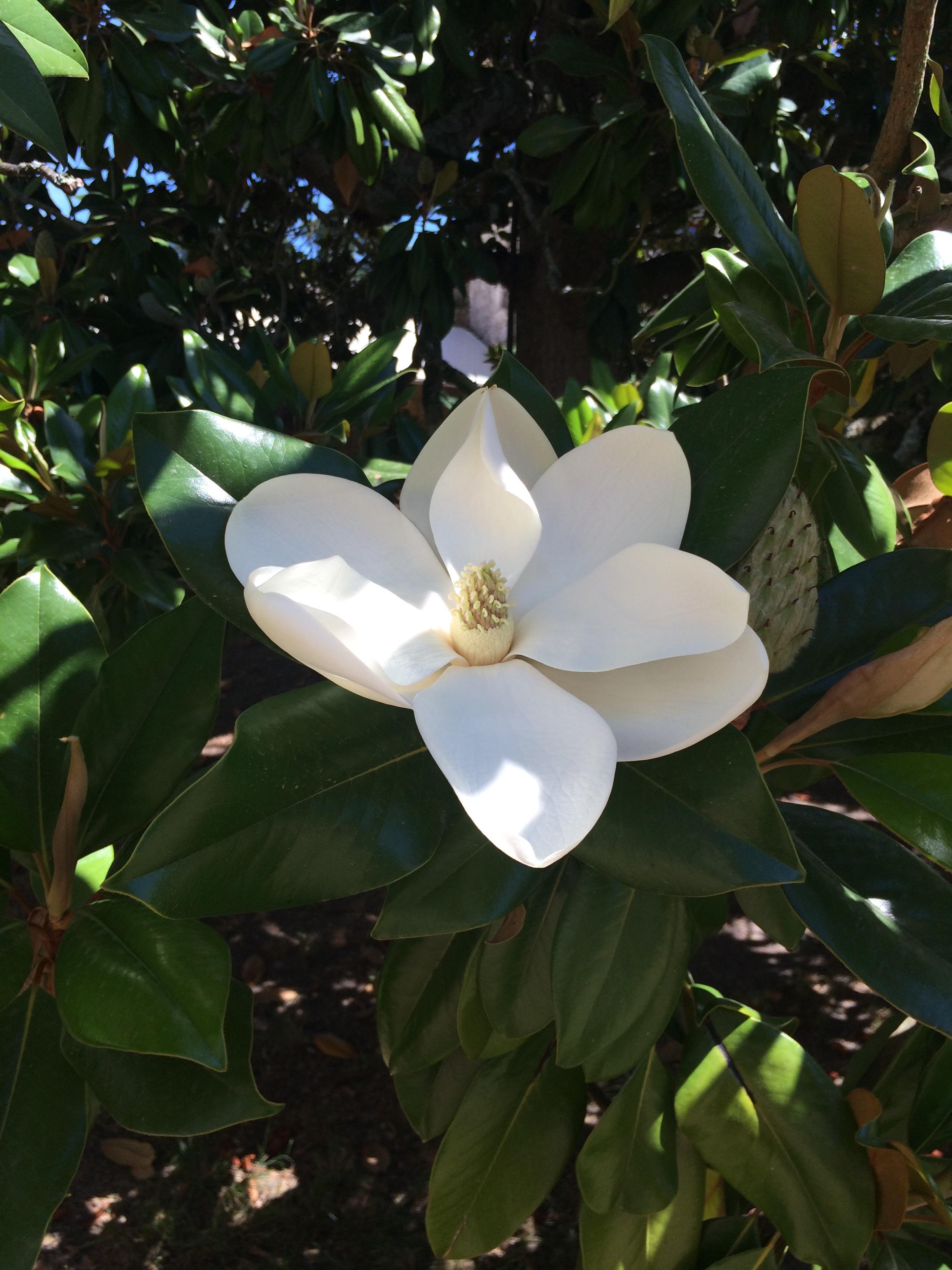 Fotos gratis rbol naturaleza flor blanco bot nica for Arboles para plantar en verano