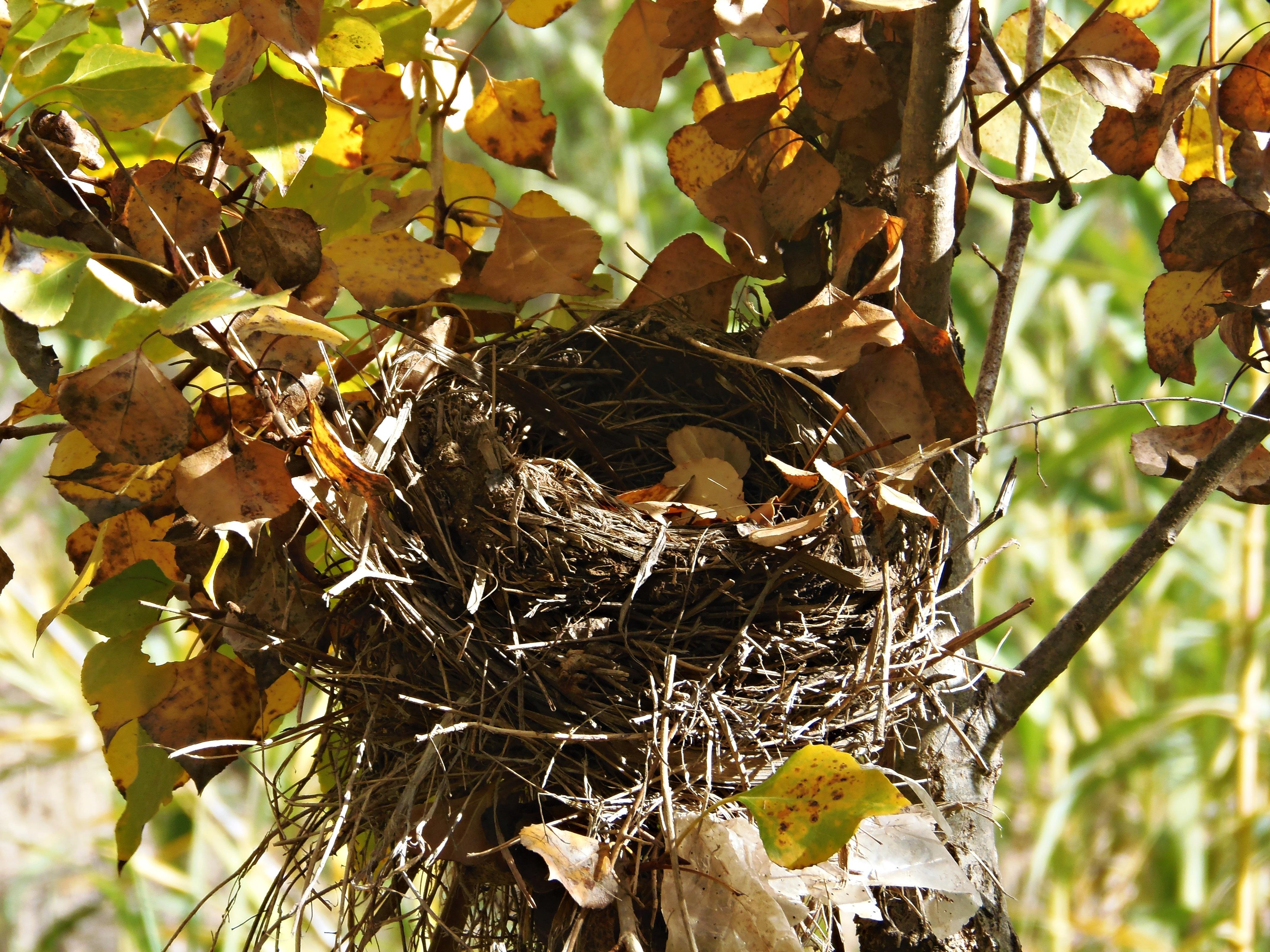 Картинки гнезда в лесу