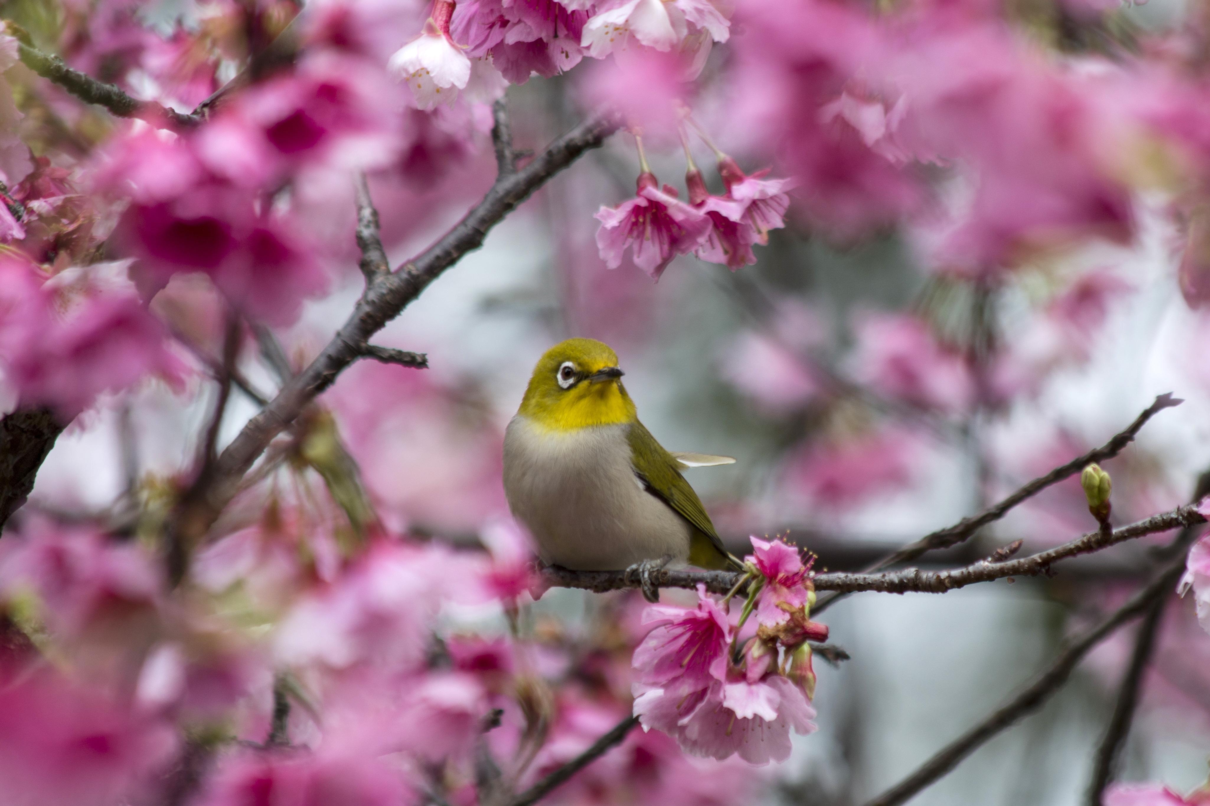 Images Gratuites : arbre, la nature, branche, oiseau ...