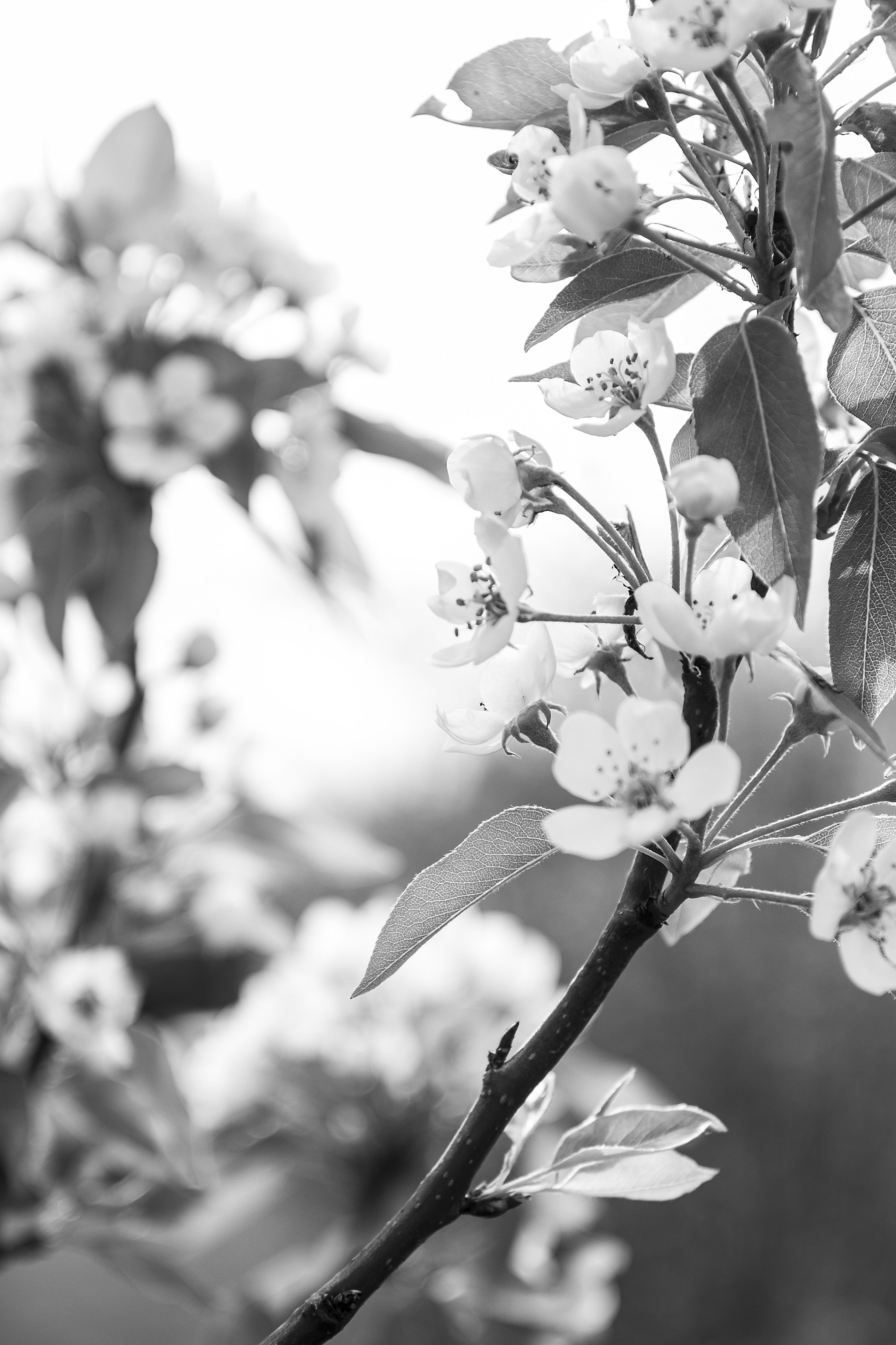Весна открытки черно белые