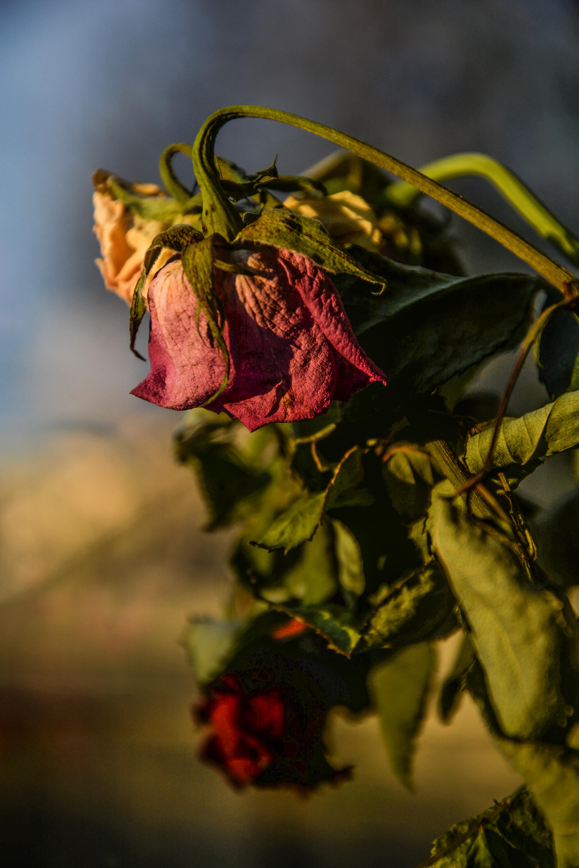 фотографии цветы завяли красивый лесной