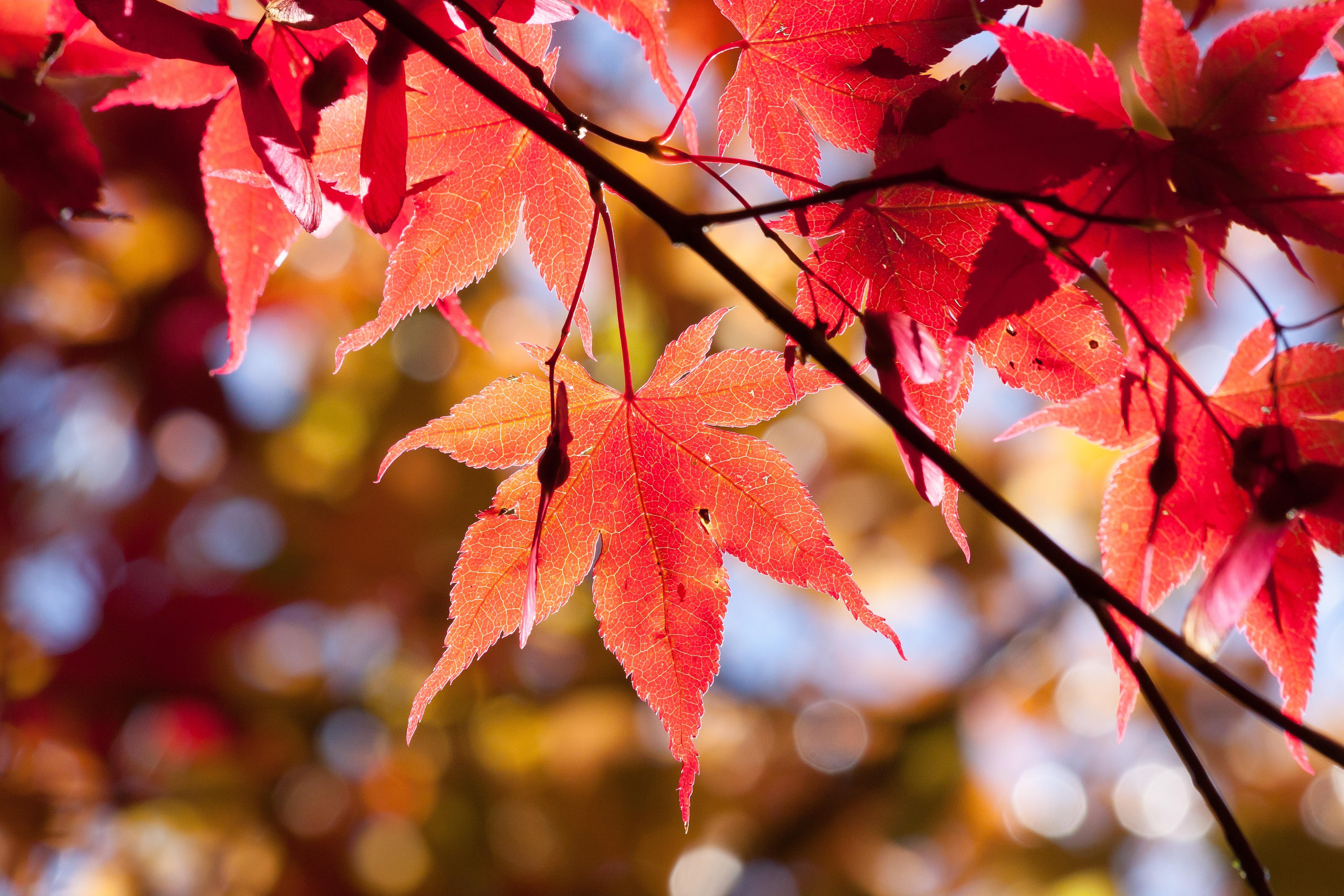 Kostenlose foto : Baum, Natur, Ast, blühen, Bokeh, Sonnenlicht ...