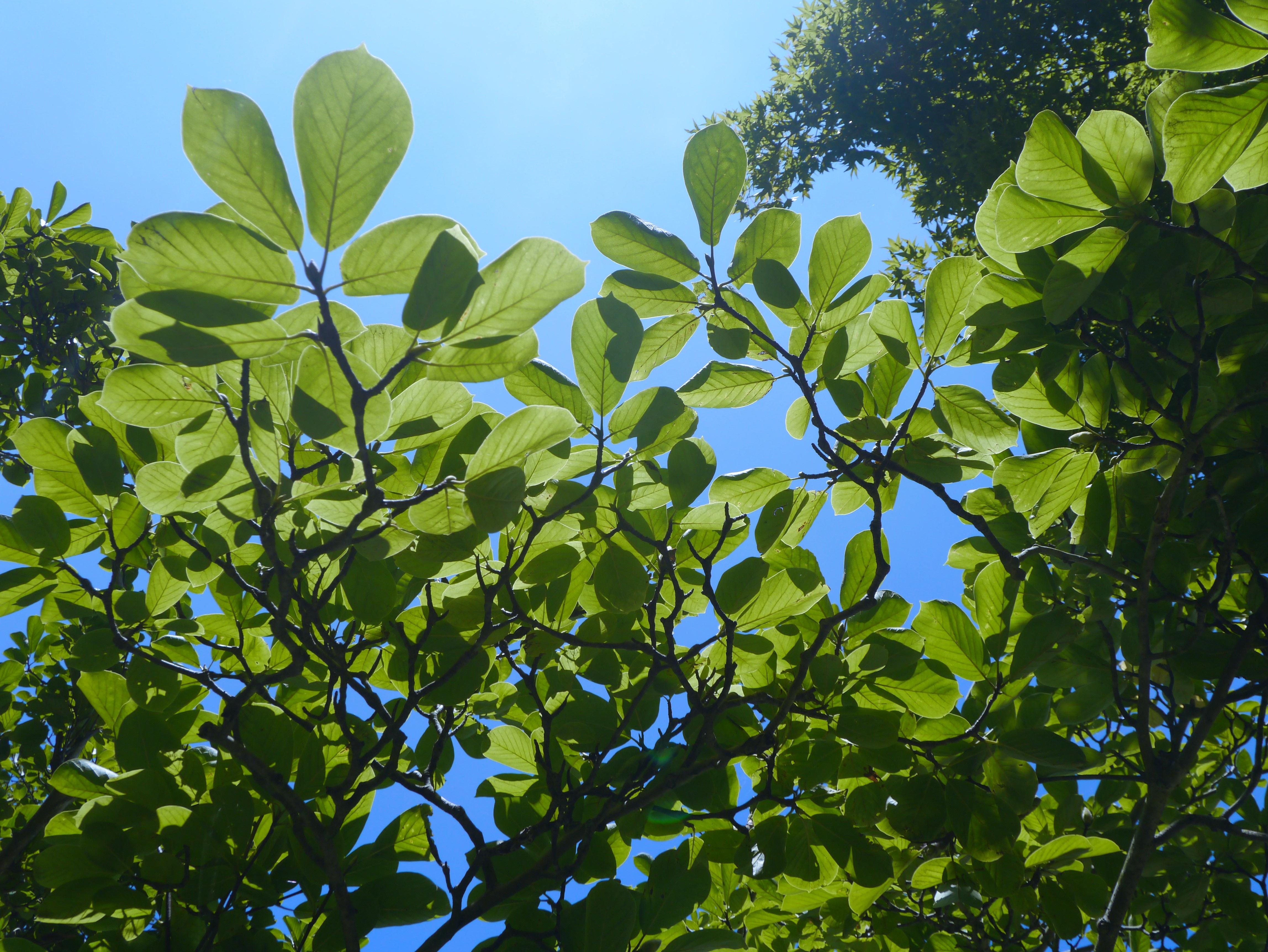 Images gratuites arbre la nature branche fleur nuage - Arbres a feuilles caduques ...