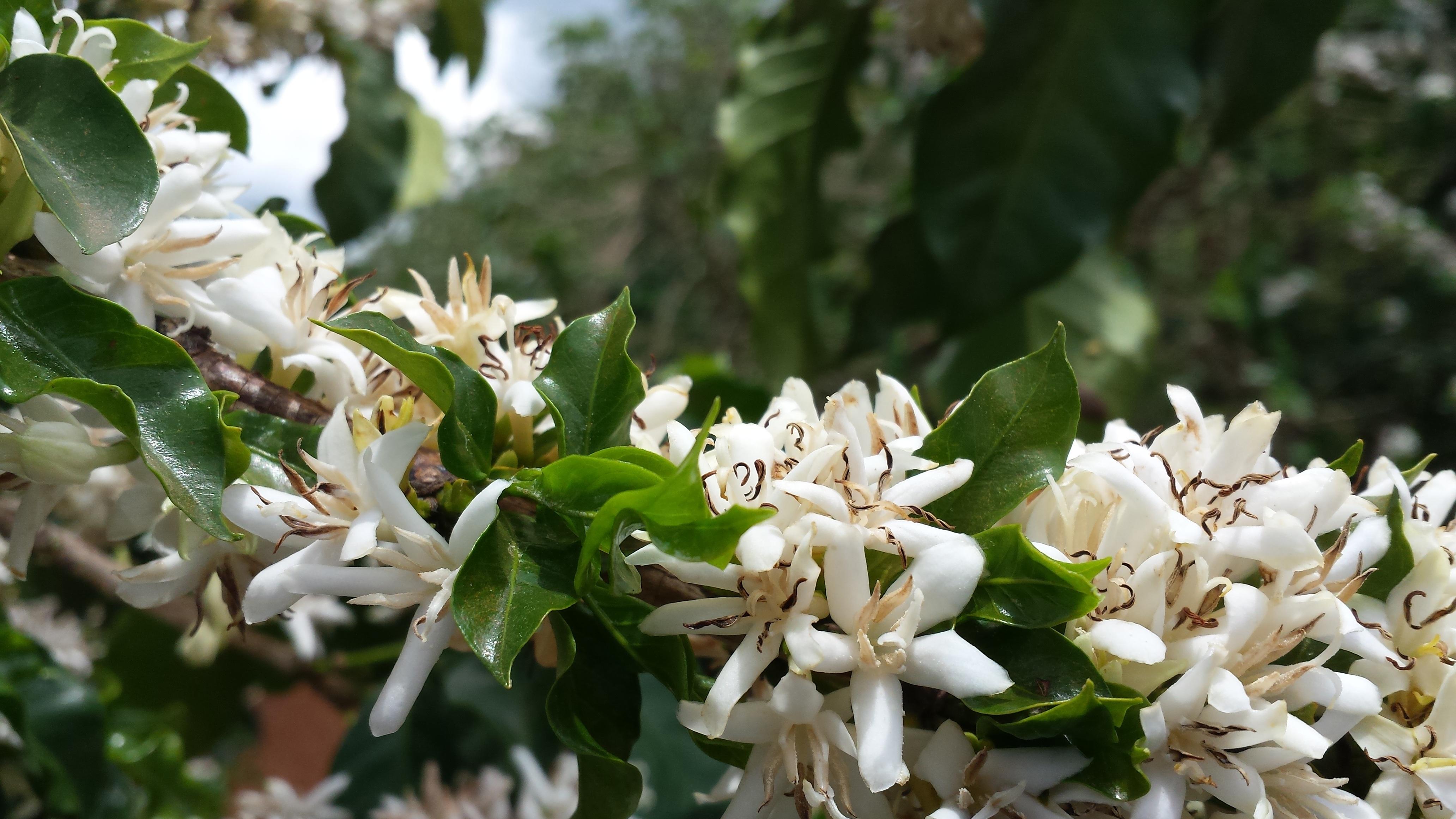 Fotos gratis rbol naturaleza rama hoja primavera for Plantas de hojas perennes para jardin