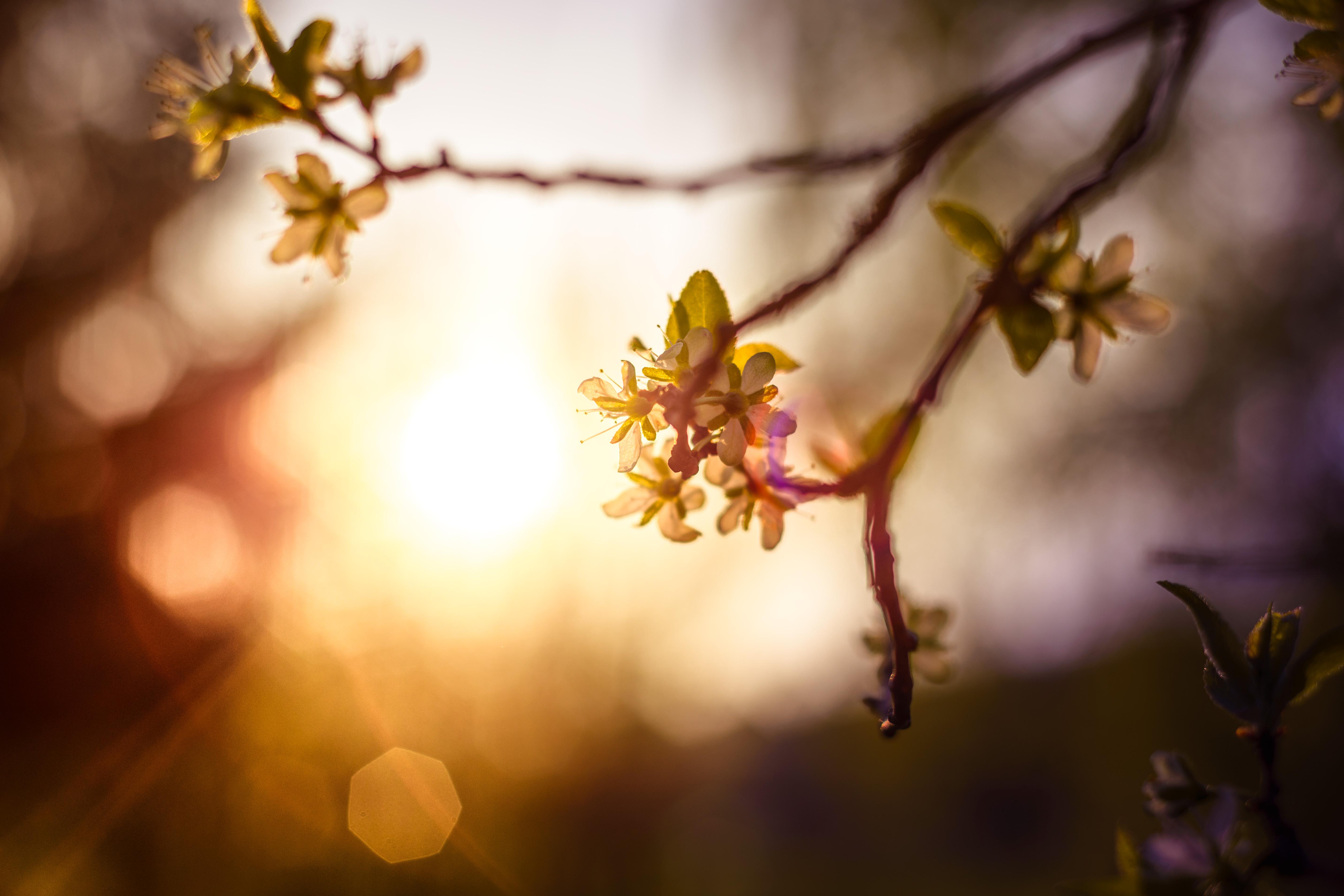 Gambar Pohon Alam Cabang Mekar Cahaya Menanam Matahari