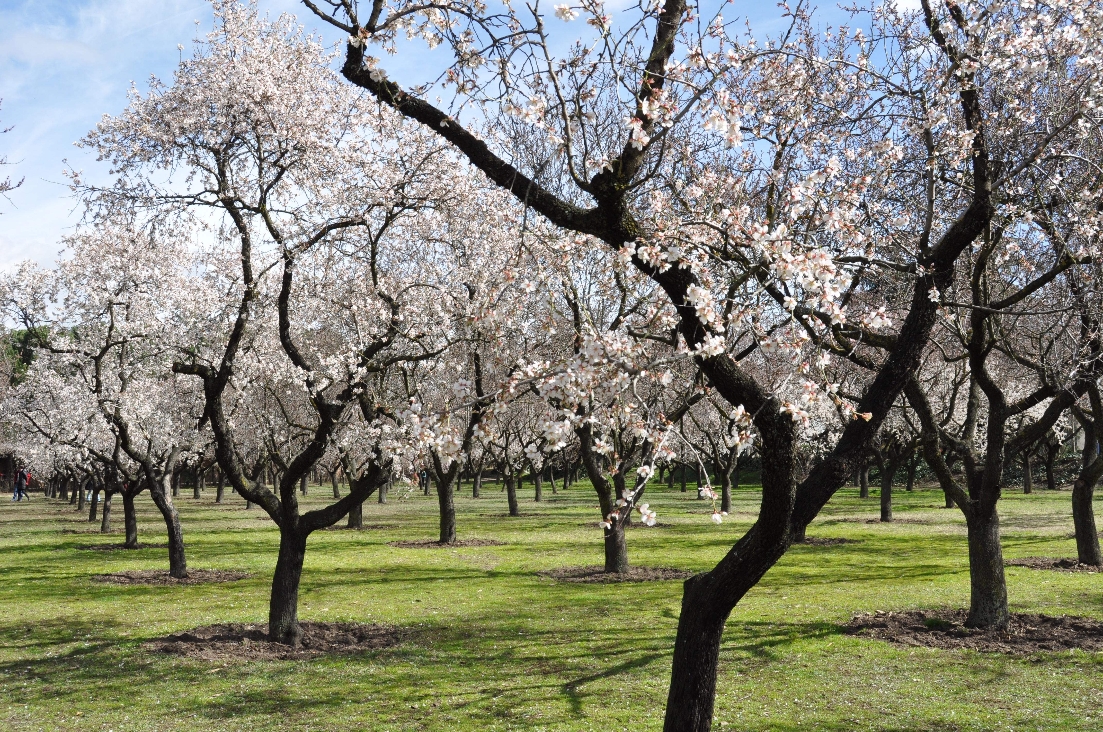 картинки деревья весной в саду