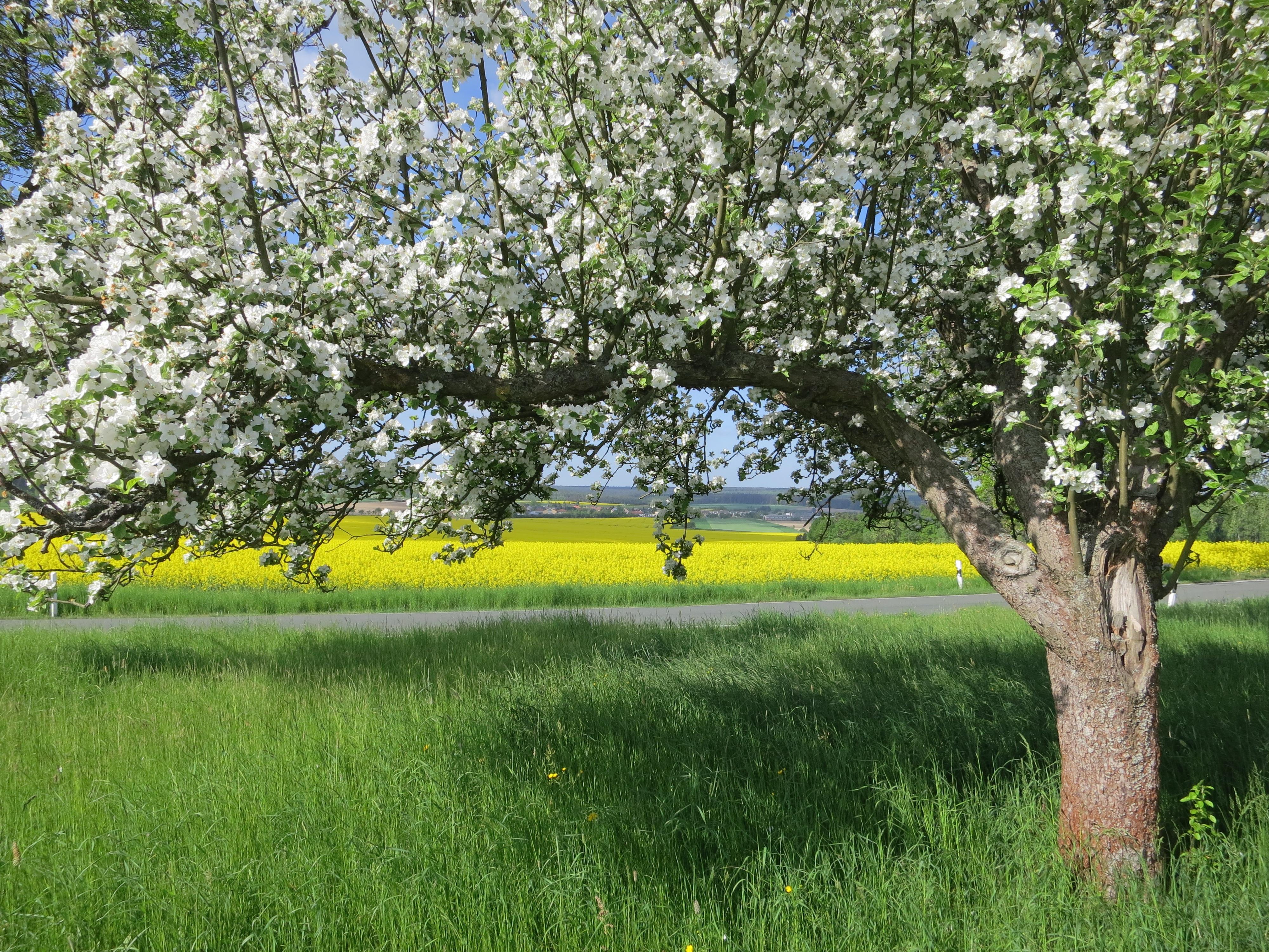 как картинки яблоневого сада цветущего приезжай бери