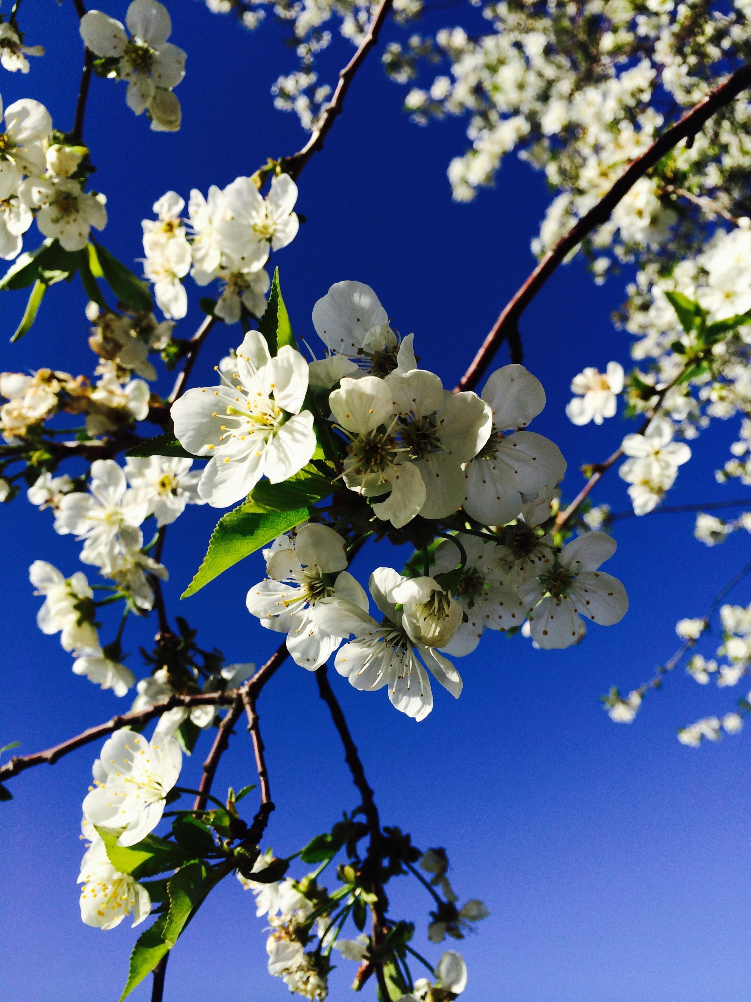 загрузить весна картинки узнать, какое
