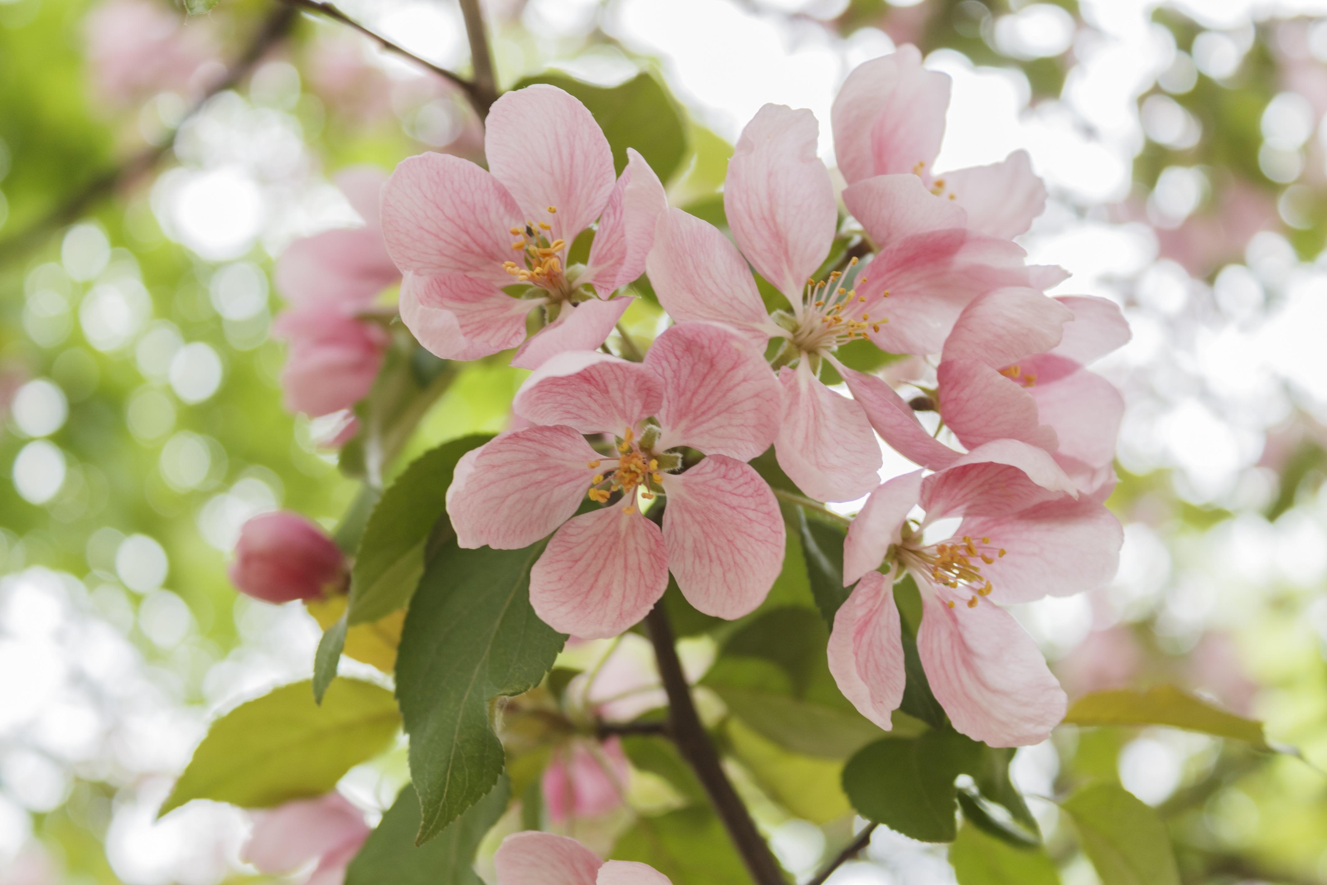 Free Images Branch Petal Bloom Food Spring Produce Botany