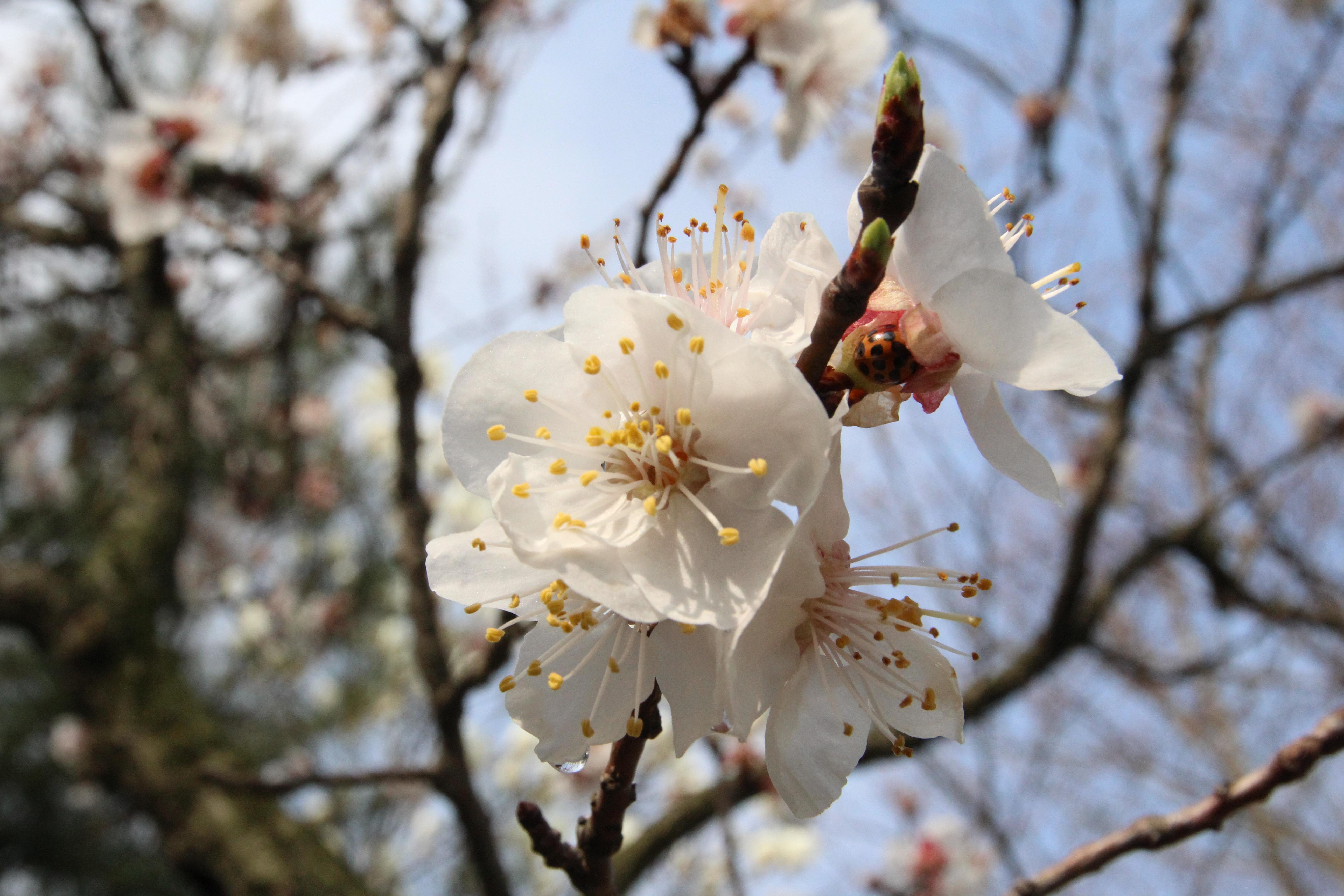 лучше весна время расцветать картинки изделия создают