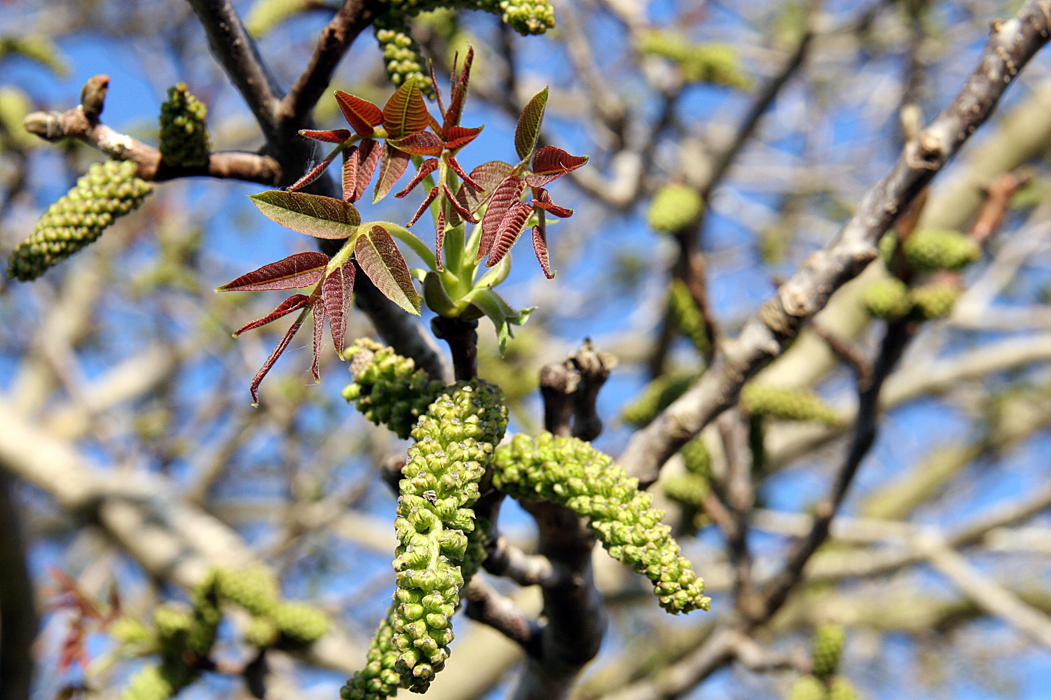 Kostenlose foto : Baum, Natur, Ast, blühen, Frucht, Blatt, Blume ...