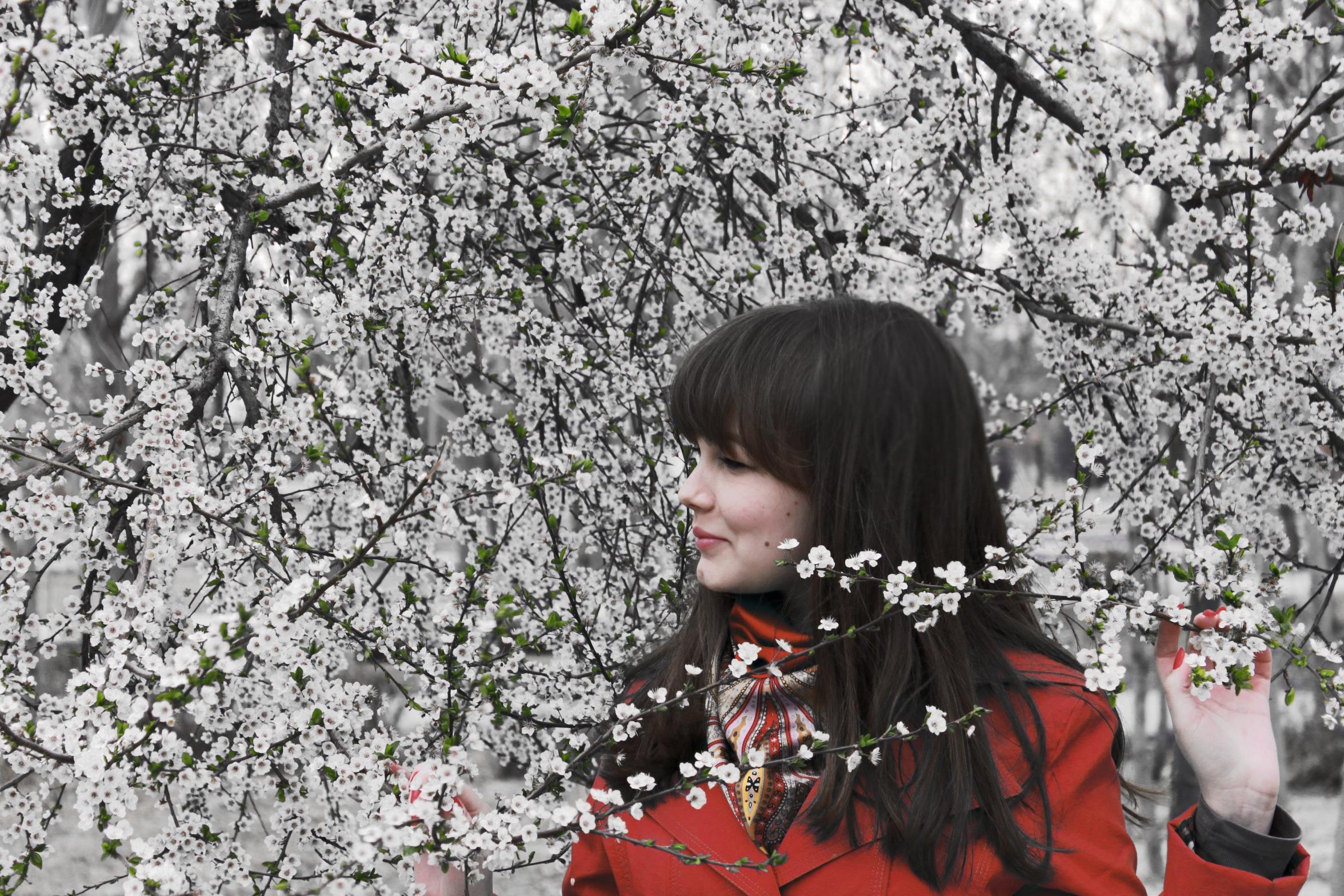 Дерево сакура и девушка